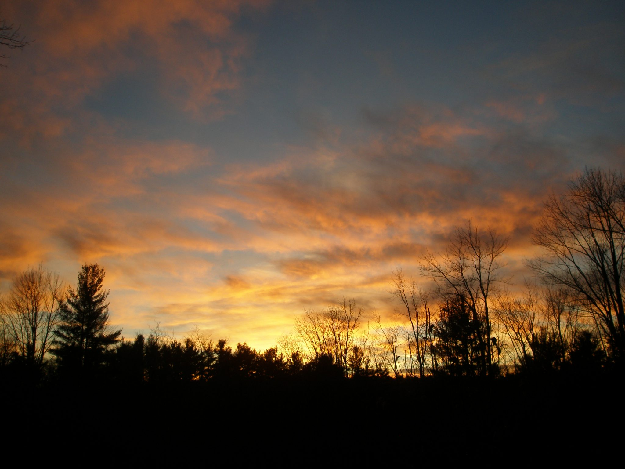 December Twilight in my New Hampshire Garden