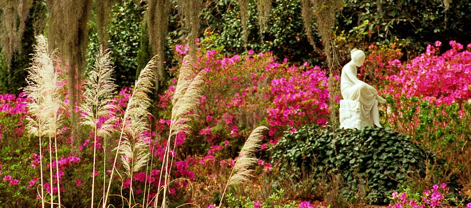 Up close, when the Azaleas are strutting their stuff. Image courtesy of the Middleton Place Foundation.