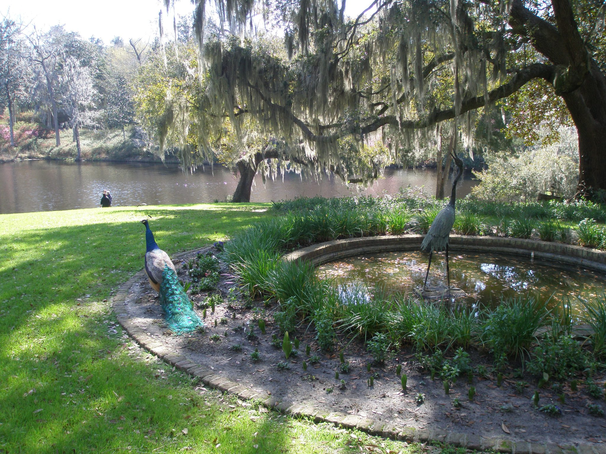 The Peacock Pool (featuring persnickety peacocks...along with a placid, antique bronze crane) with the Mill Pond in the background.