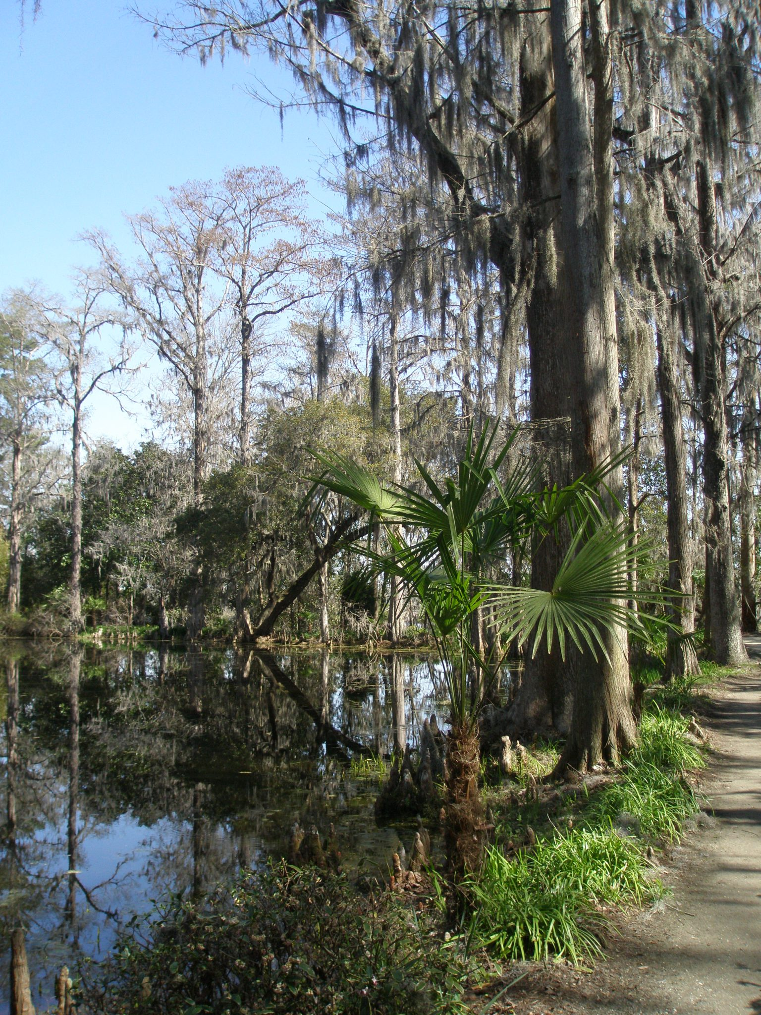 Cypress Lake path