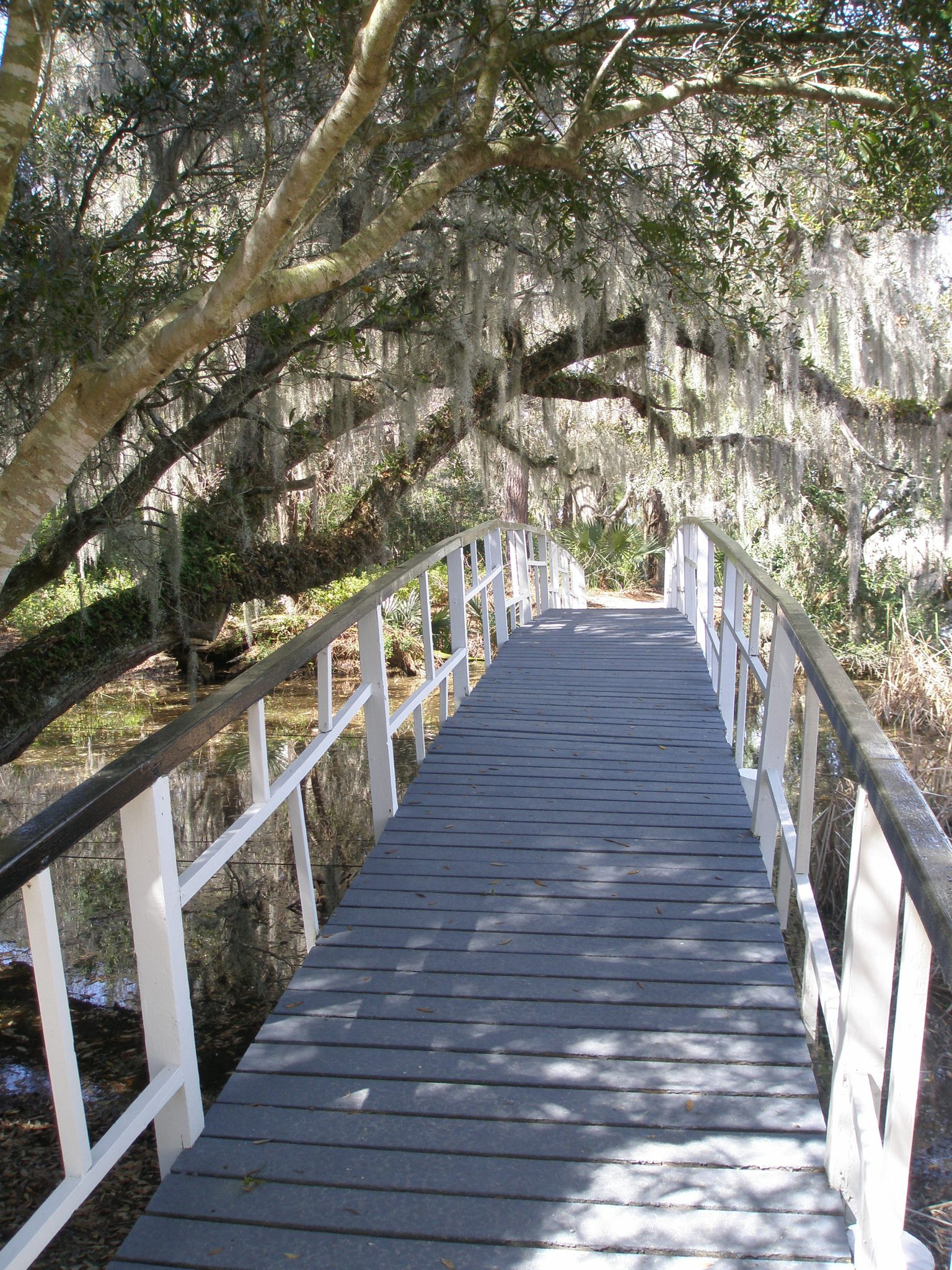 An oriental-style bridge spans an inlet of the Ashley River, leading to a wildlife tower and nature trails. A live oak tree and Spanish Moss create a living tunnel.
