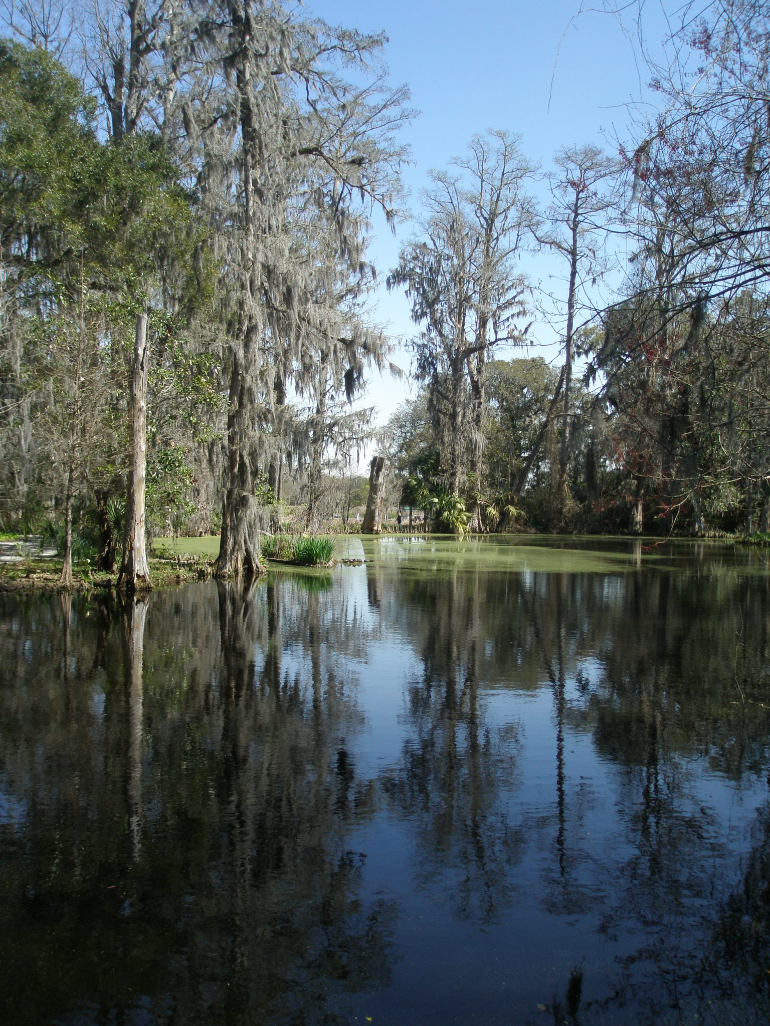 Big Cypress Lake