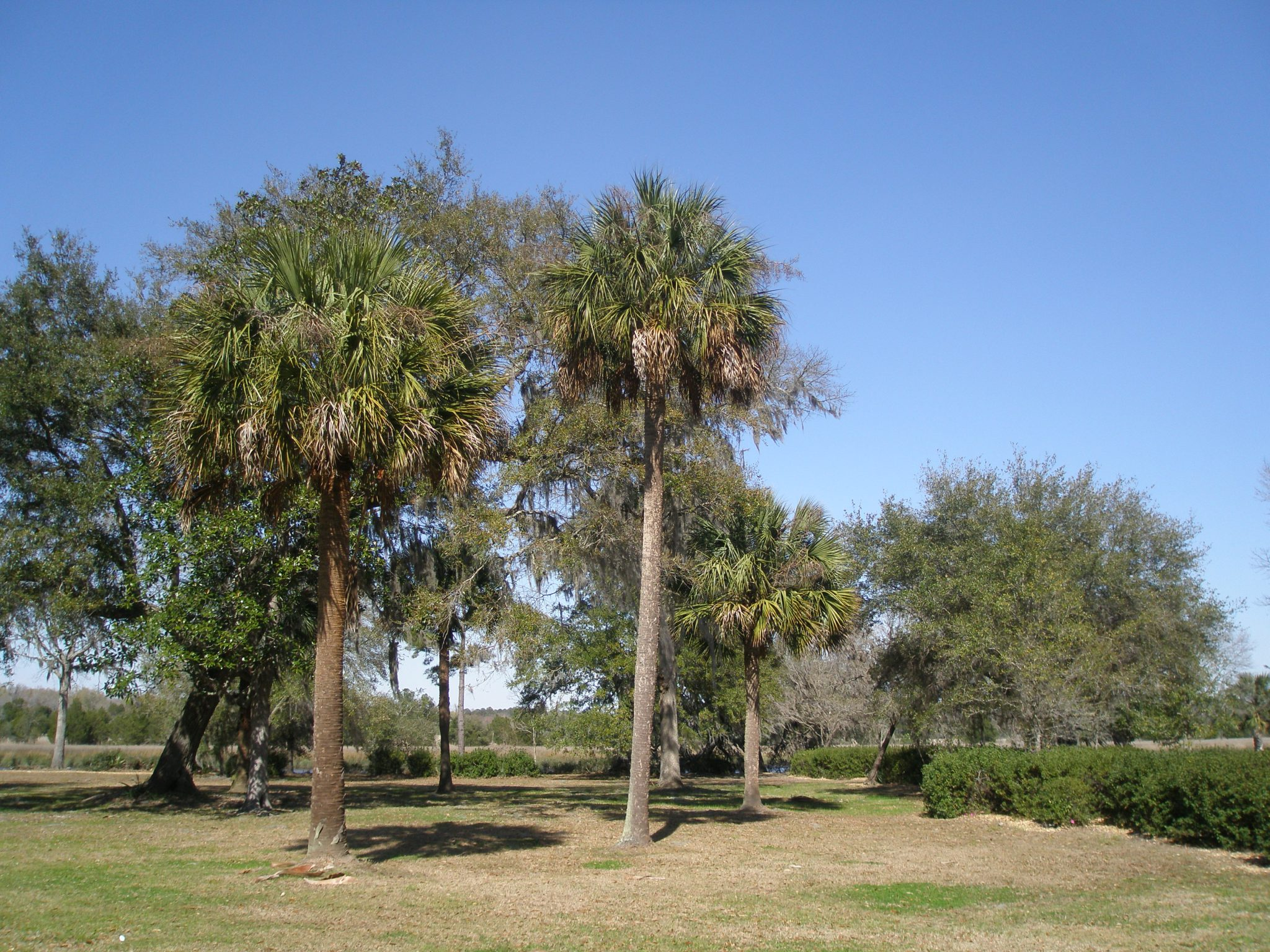 Palm-studded Grounds, as we approached the Ashley River