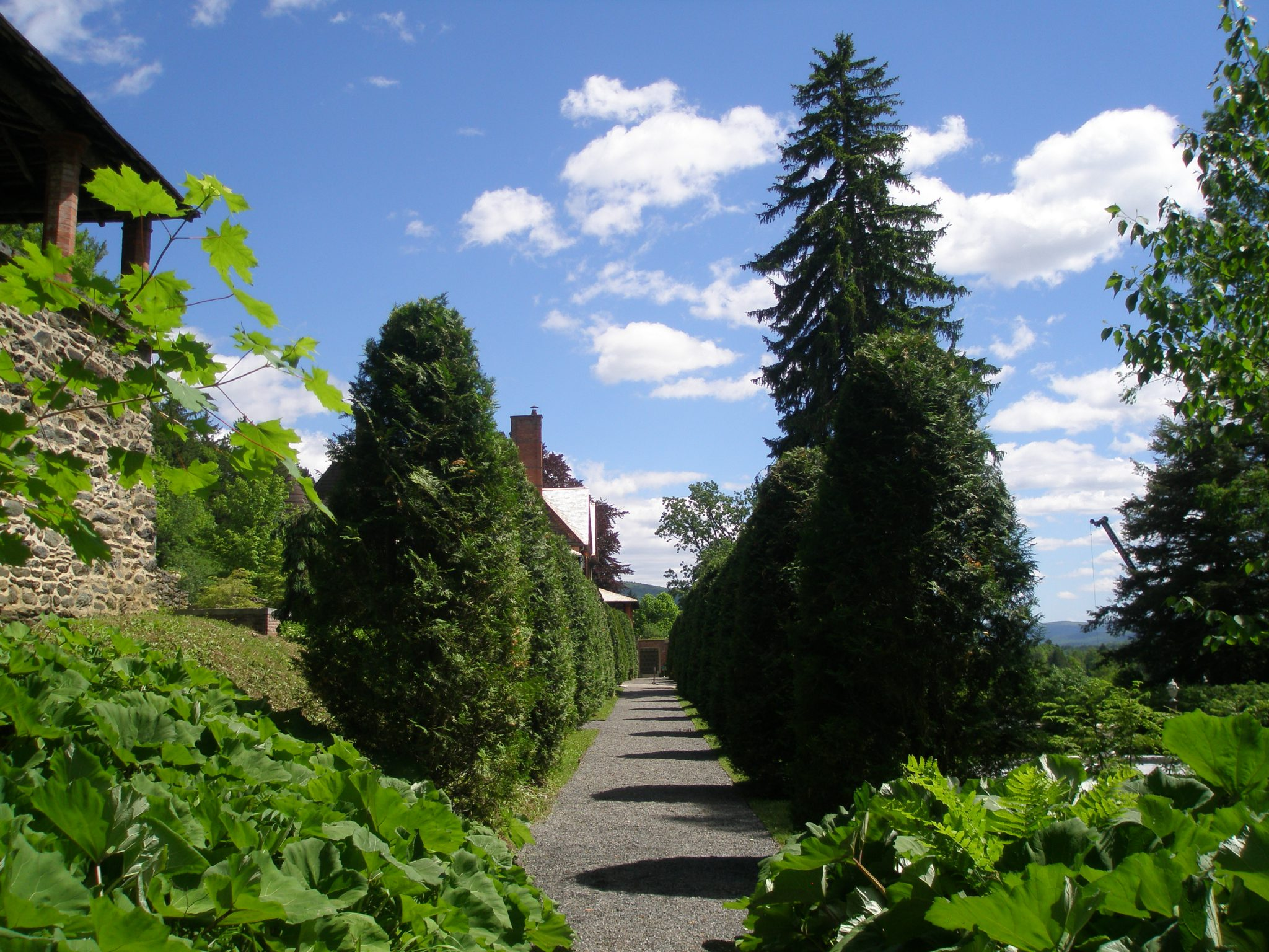 Nathan Barrett's Arborvitae Walk; looking toward the House.