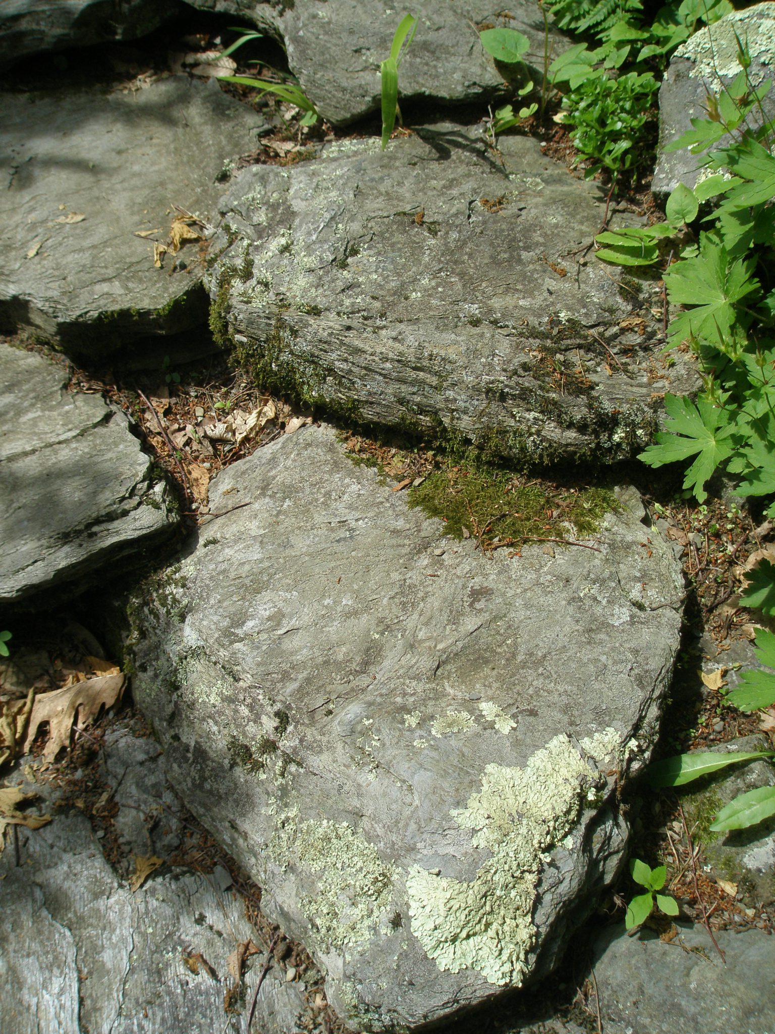 Tiptoe Rock Steps
