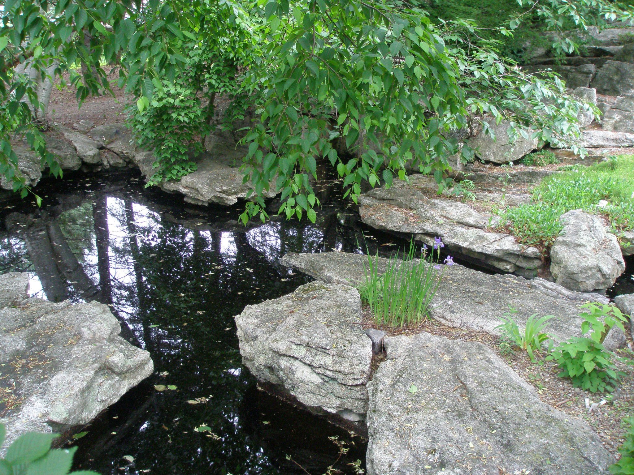 Stepping Stones in the Lake