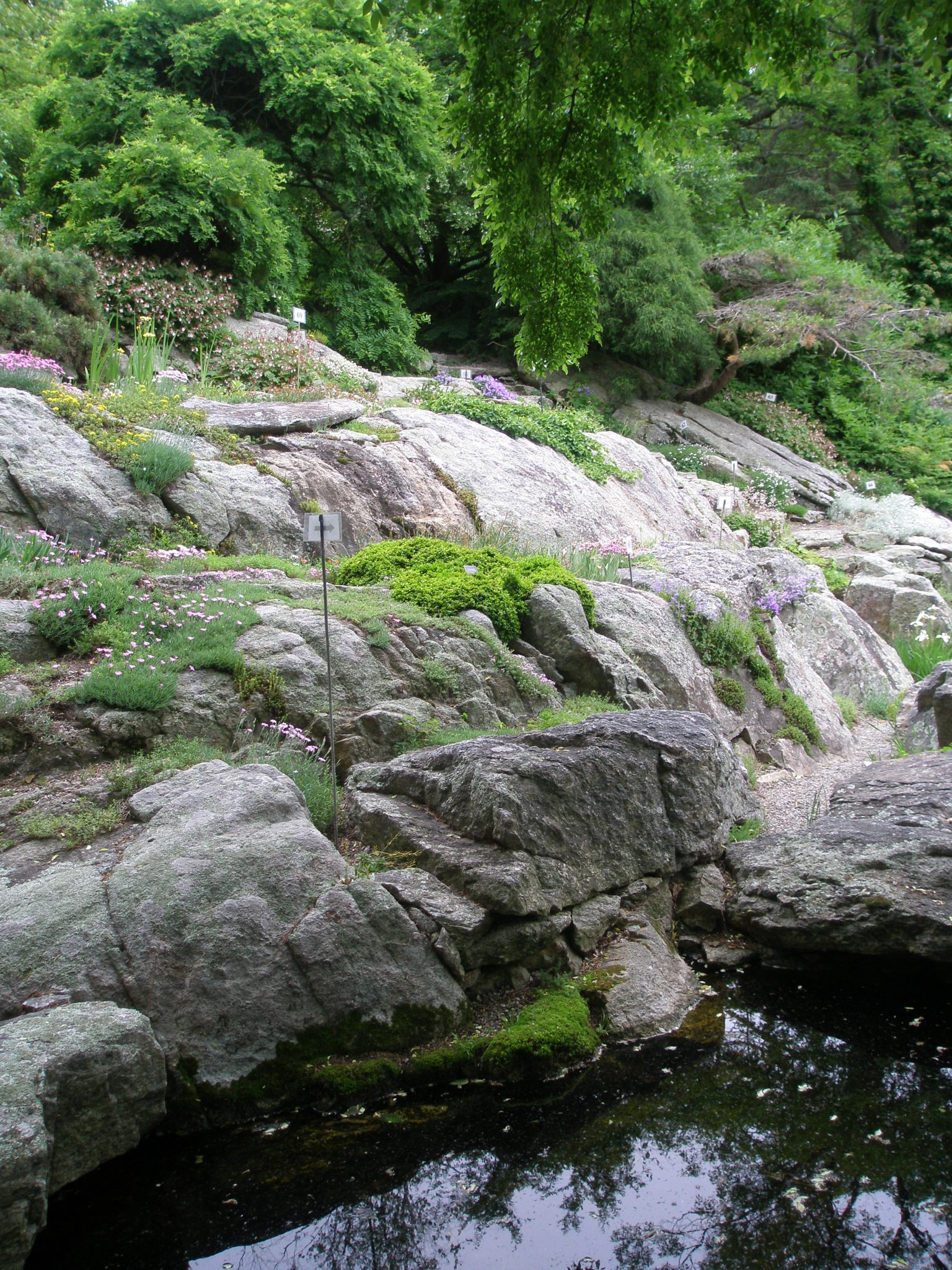 Alpine Plants hug the contours of the Rock Ledge Garden