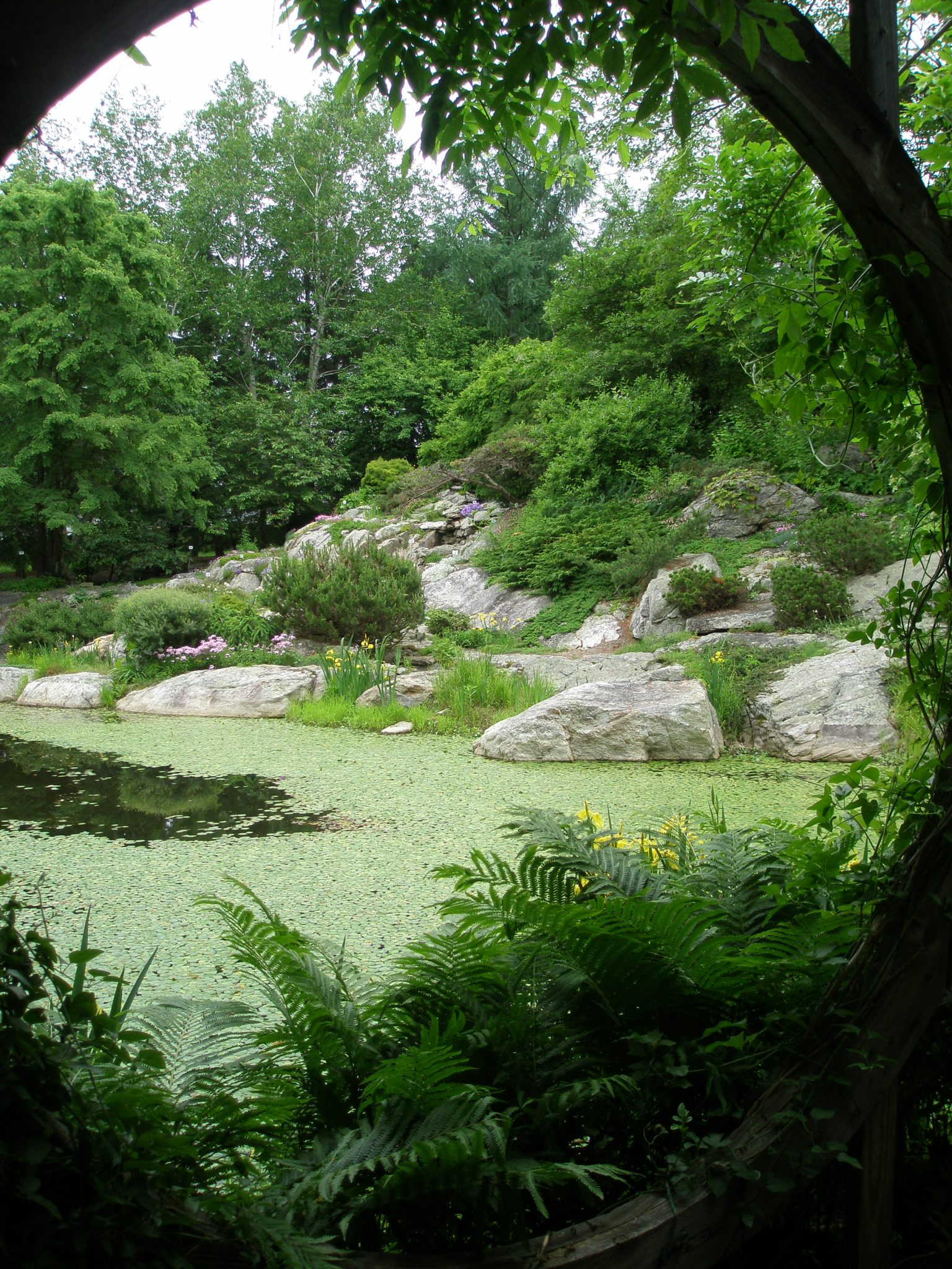 View of Lake and Rock Ledge Garden, from inside the Wisteria Pavilion.