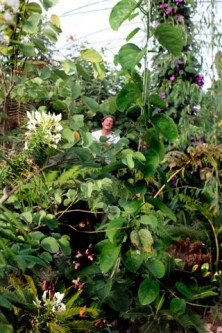 Adjacent to The Hot & Spikey Greenhouse is the Cloud Garden Greenhouse, which contains 500 species of plants that are too frost-sensitive to grow outside in The World Garden. Image courtesy of The World Garden.