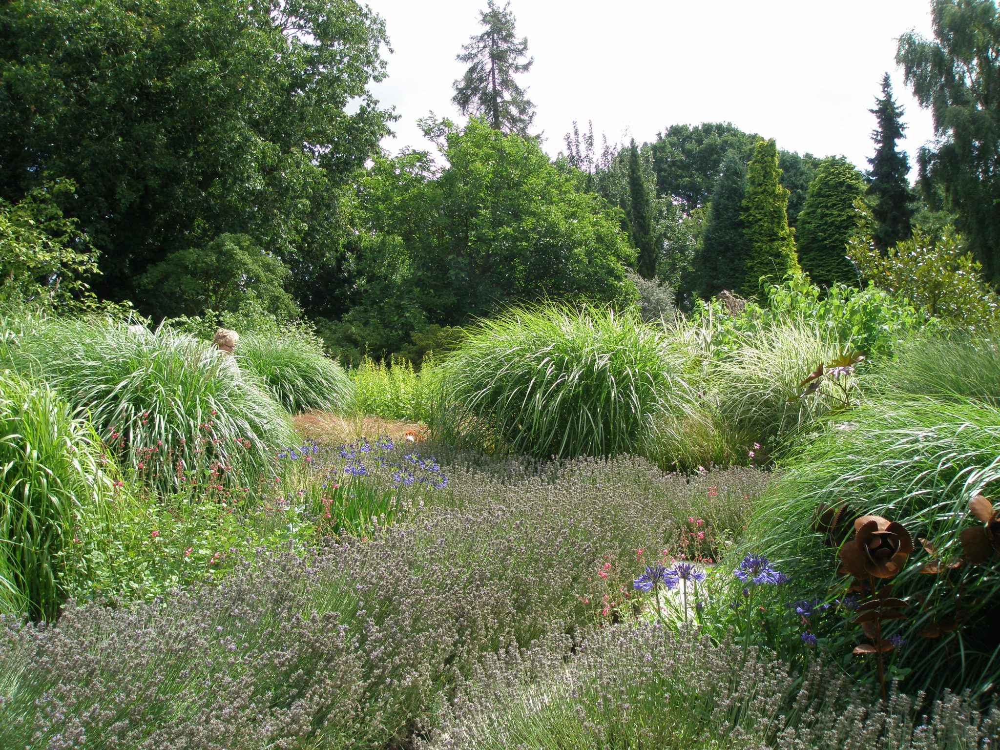 As we entered the Garden, we were engulfed by tall grasses, blooming lavender, and majestic agapanthus.