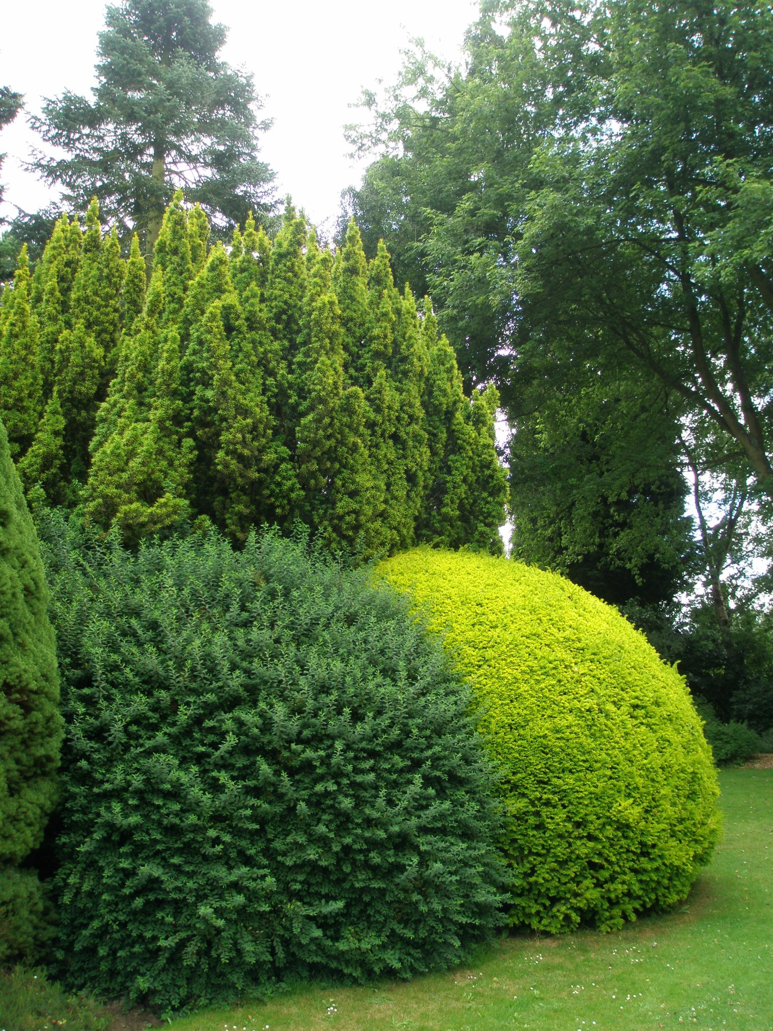 Precisely-clipped Conifers in the rear portion of the Garden