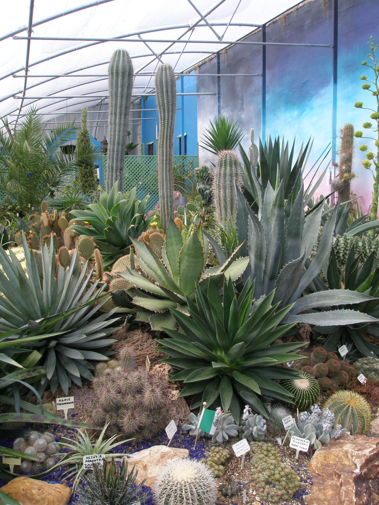 Another view of The Hot & Spikey Greenhouse
