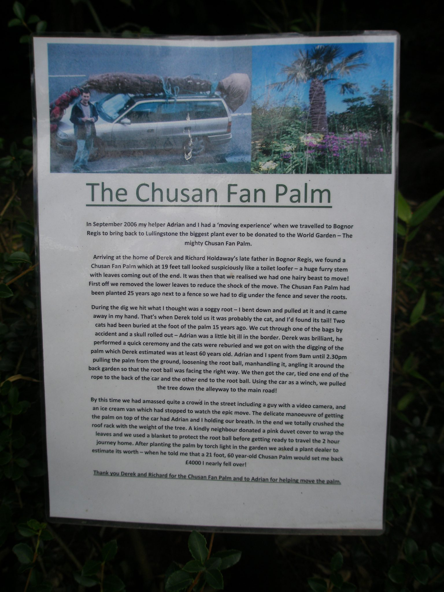 The Saga of The Chusan Fan Palm, which is planted in Asia.