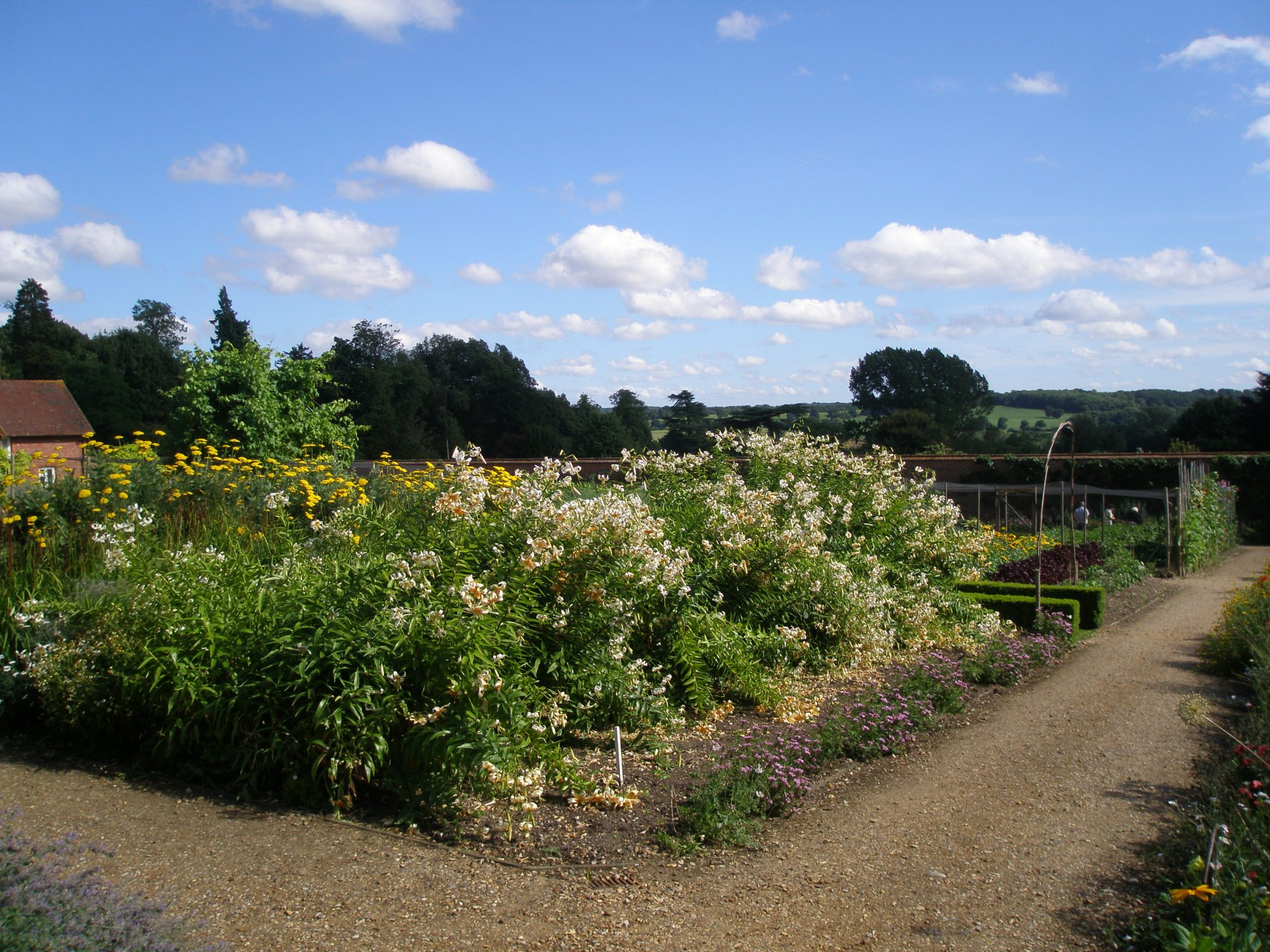 We entered the Walled Garden at its highest poing, where tall lilies were just beginning to shed their blossoms.