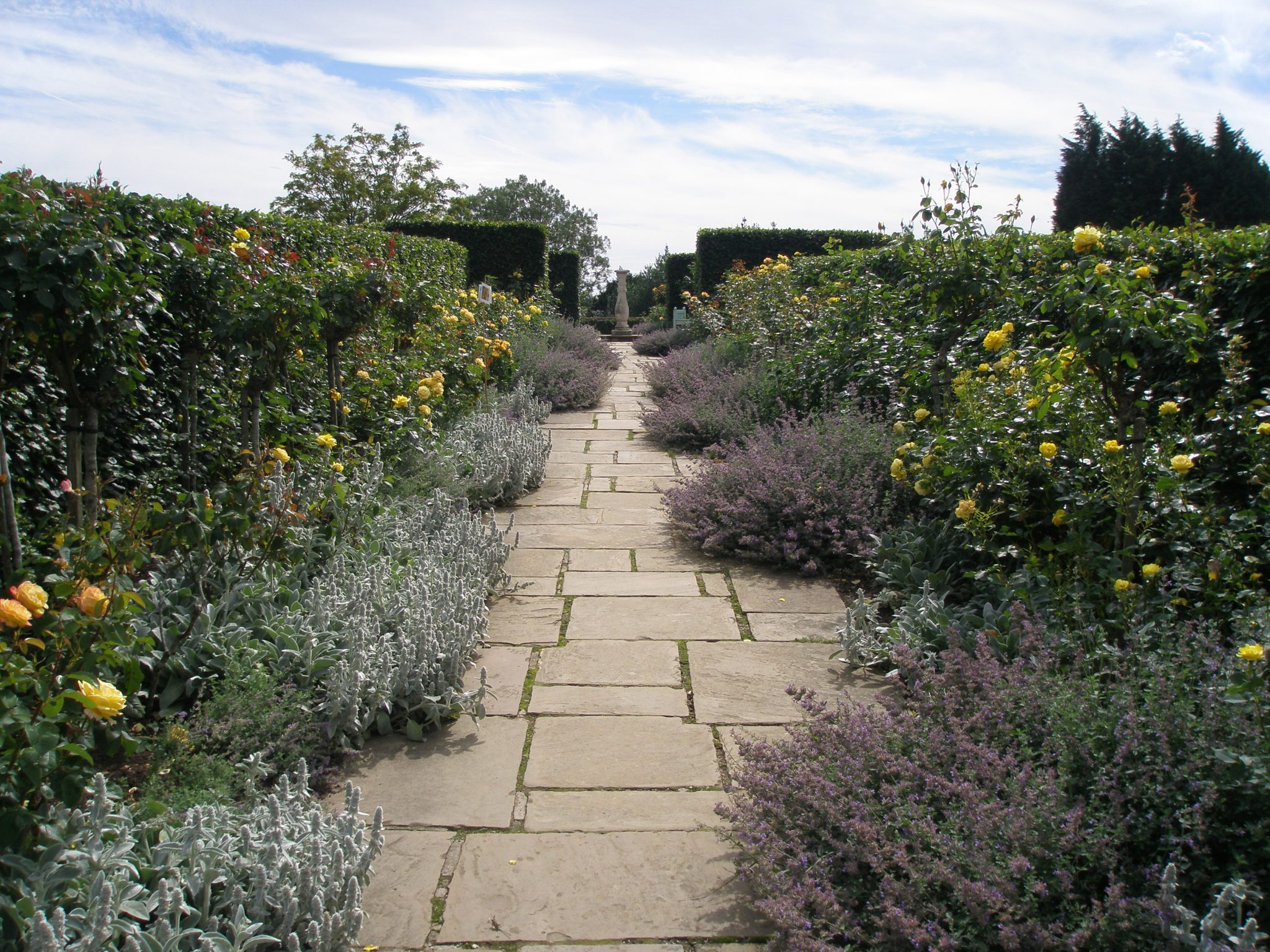 We're inside the Golden Rose Avenue, which runs east-west in the garden. The beds contain yellow and gold flowering roses, planted on each side in two parallel rows. Lambs ears and lavender billow out across the paving stones.
