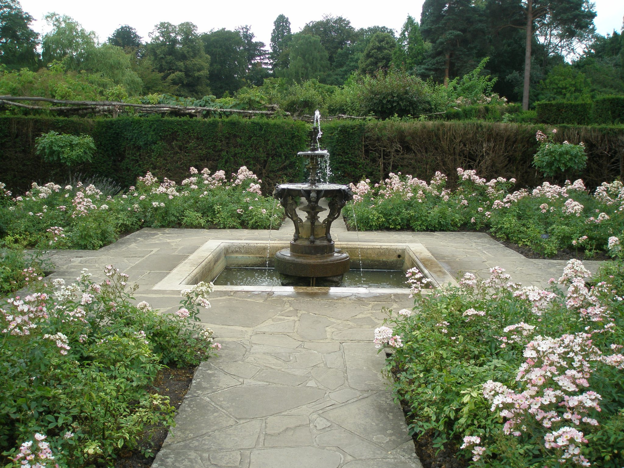 A profusion of Ballerina Shrub Roses within the Tudor Garden