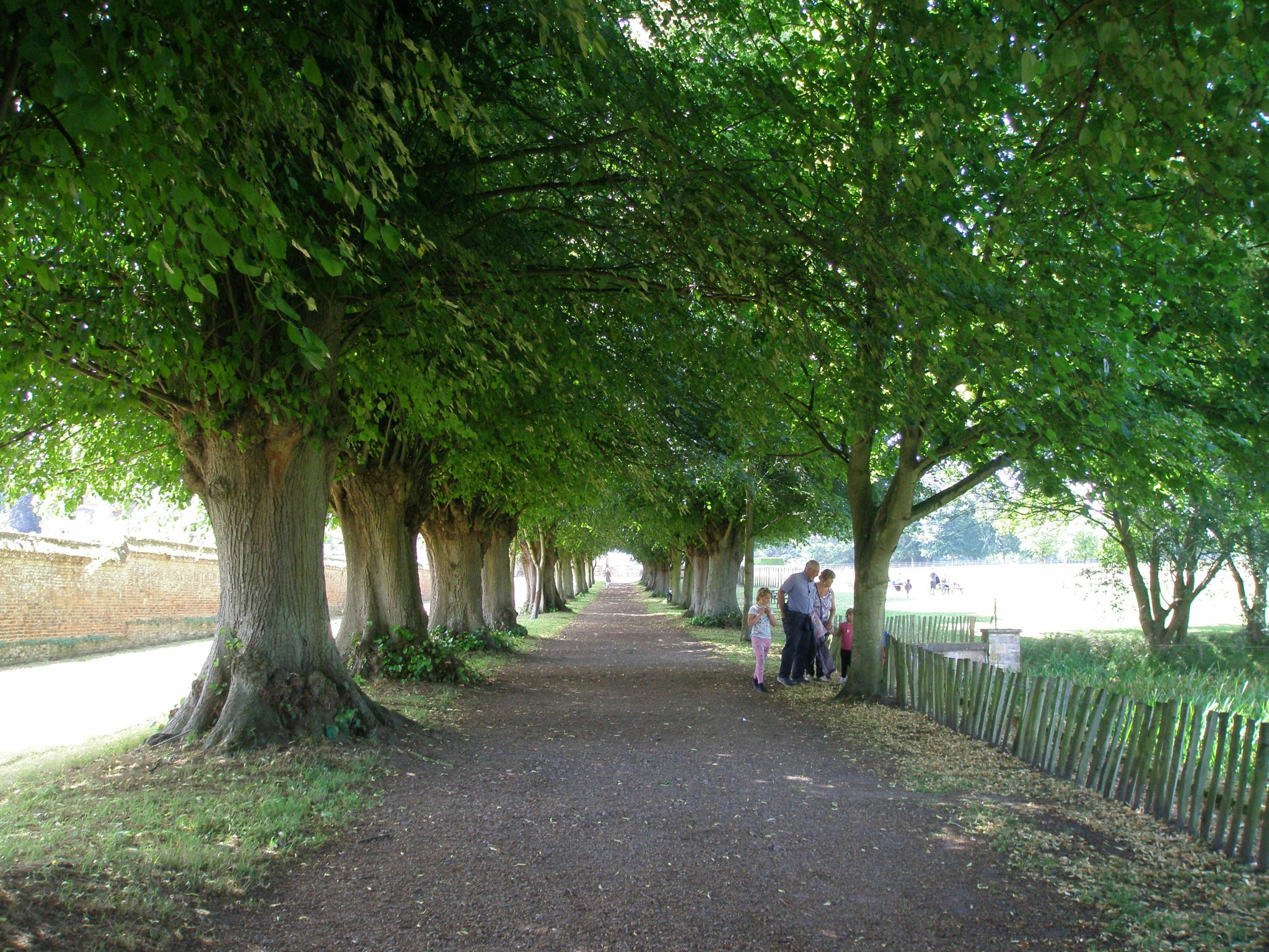 We entered the grounds via the Lime Walk, an avenue of large-leaved lime trees (planted with Tilia platyphyllos & Tilia vulgaris)