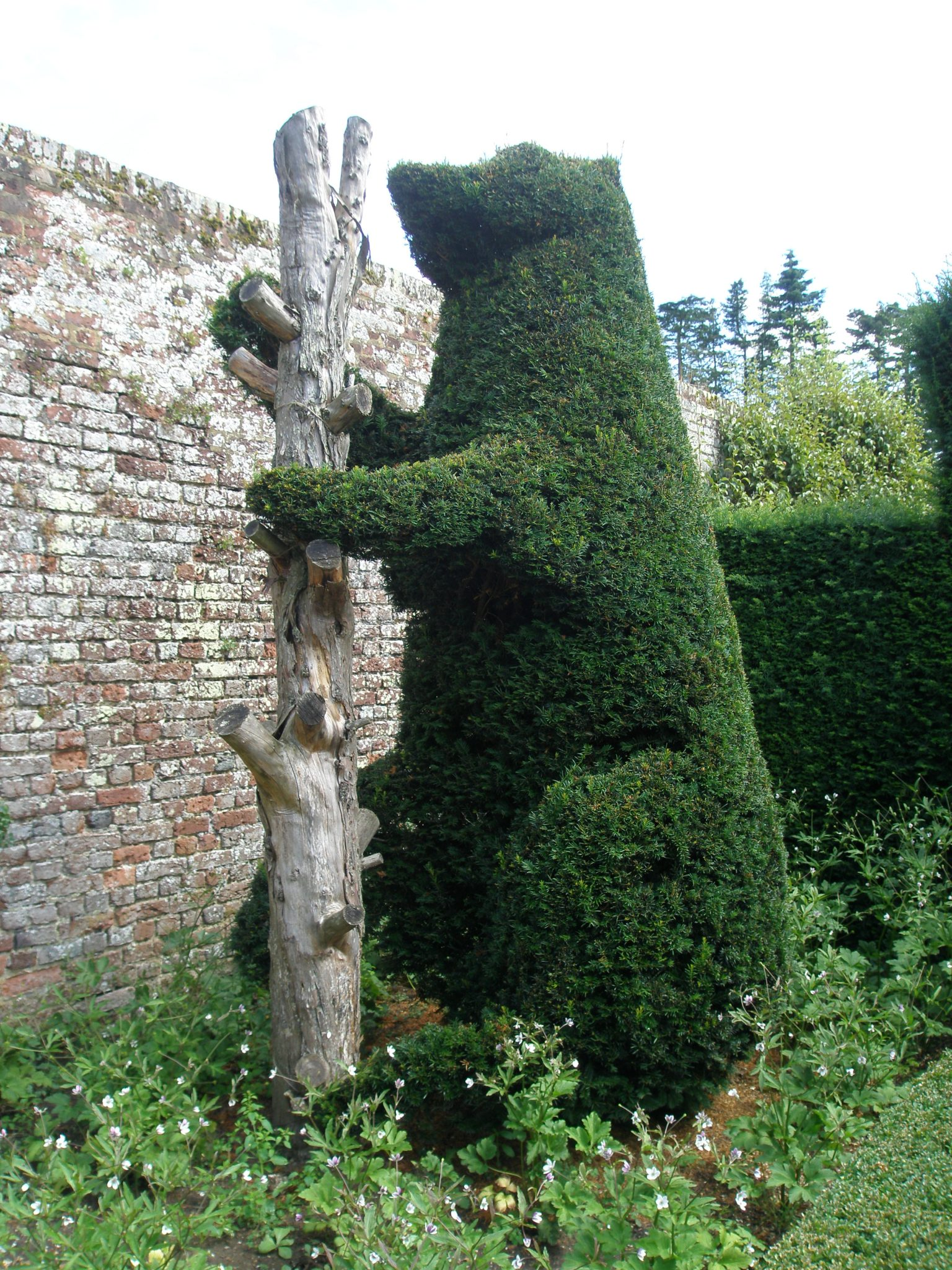 A more successful topiary effort: this one a Bear With Ragged Staff, which is the heraldic symbol of the Dudley family. Sir Henry Sidney married Mary Dudley in the 16th century.