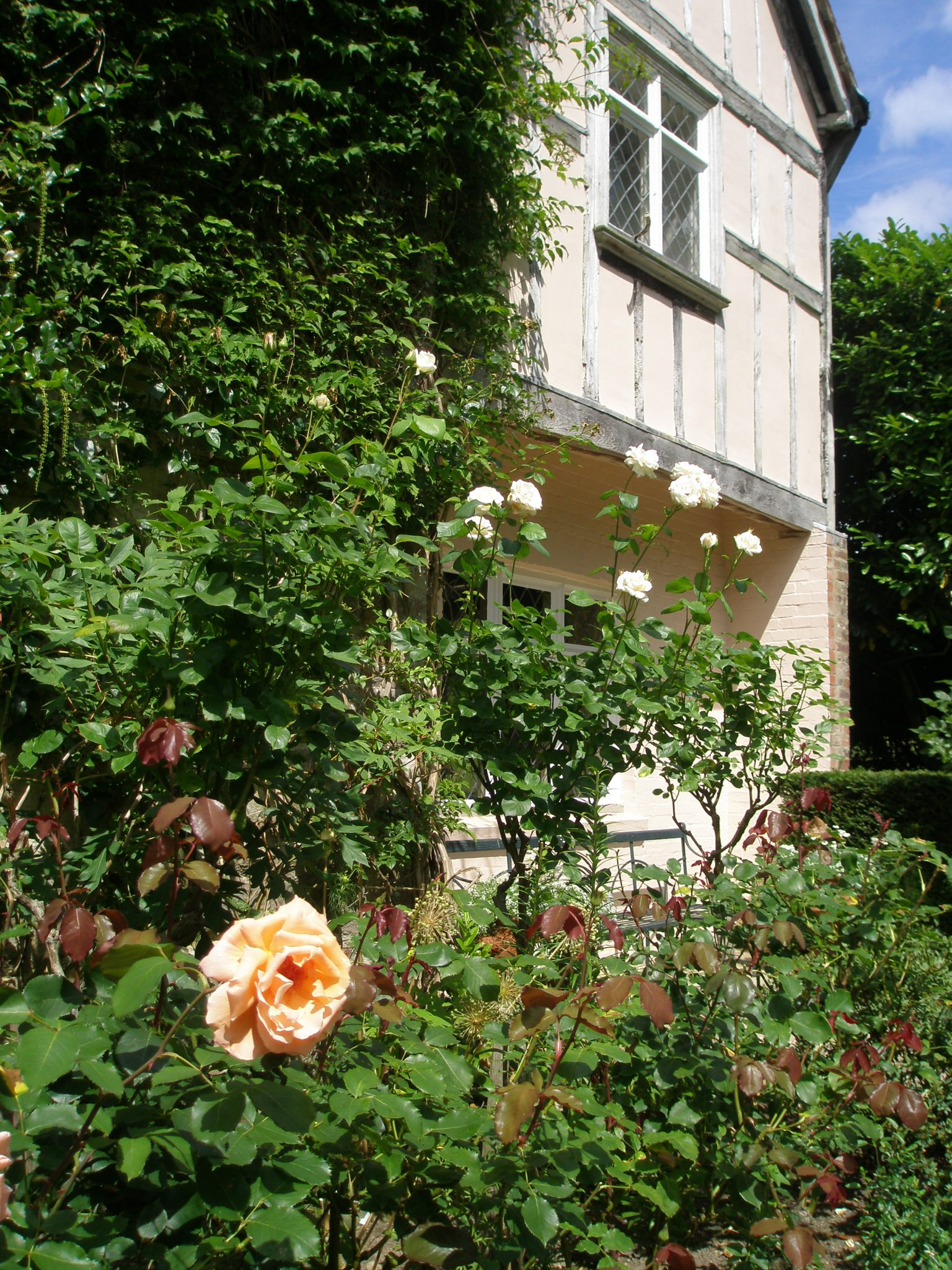 Roses on the Main Terrace, by the old, half-timbered walls of the House