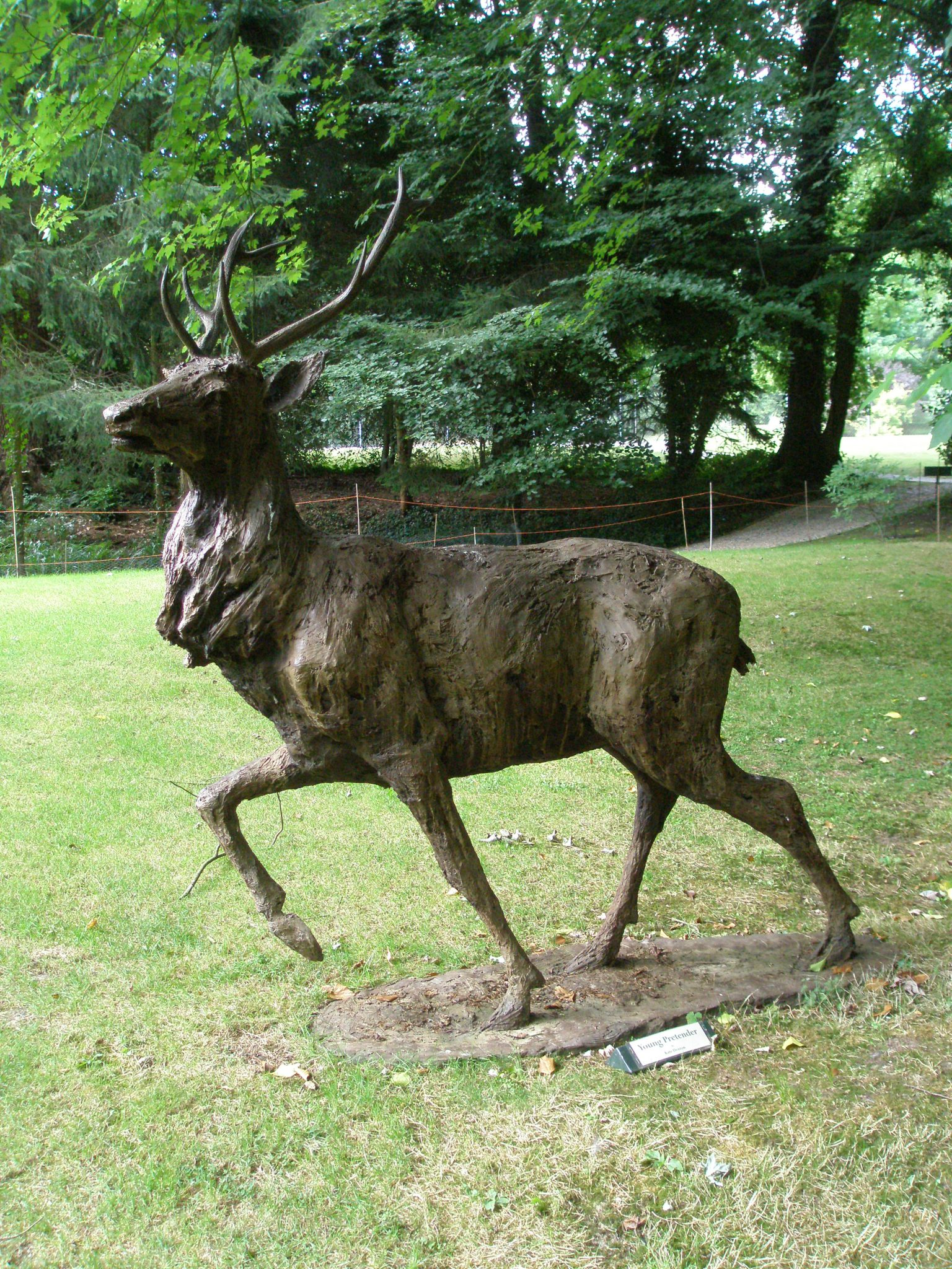 A Stag, on the lawns behind the Island