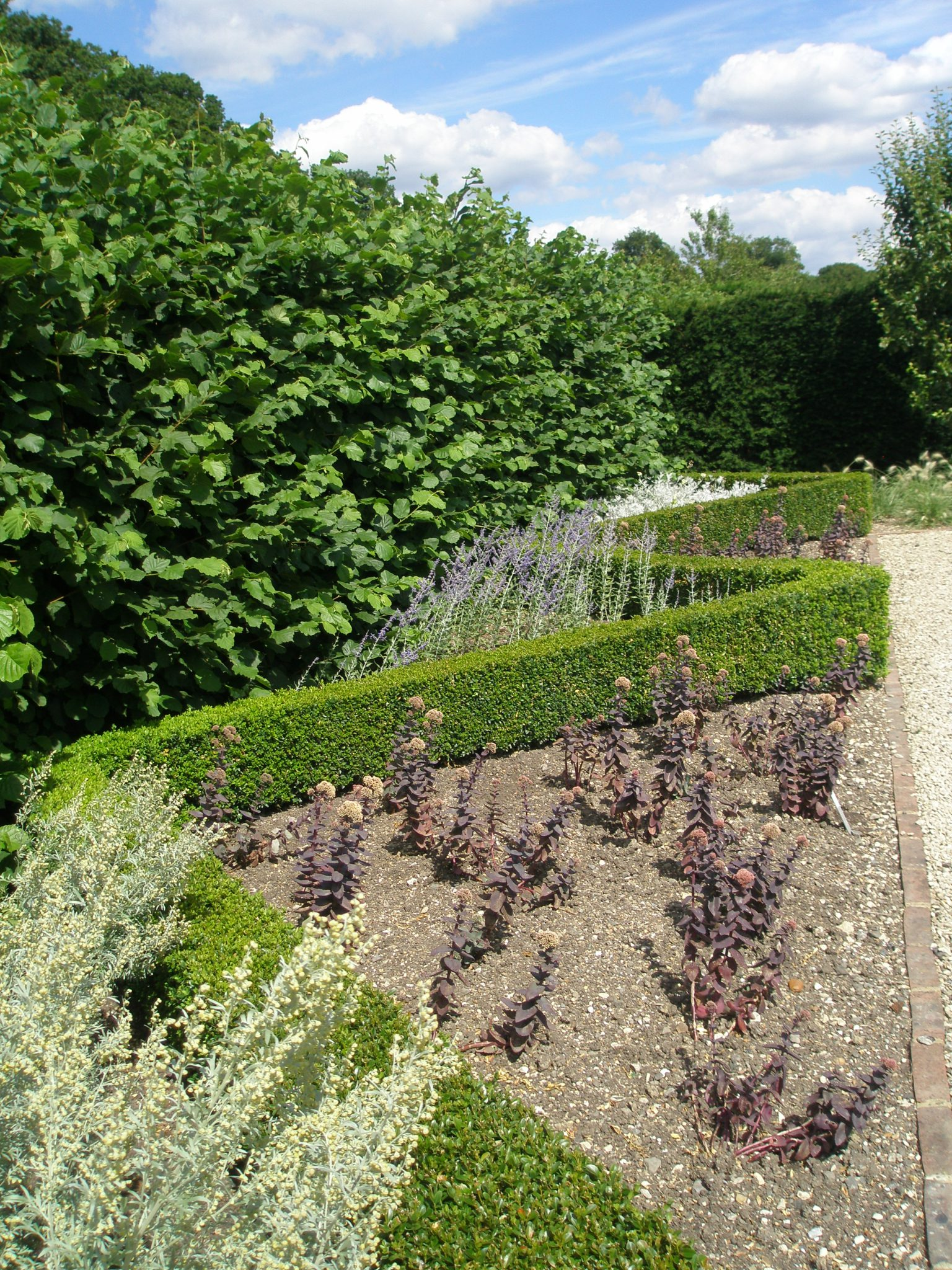 A recently-planted Boxwood parterre