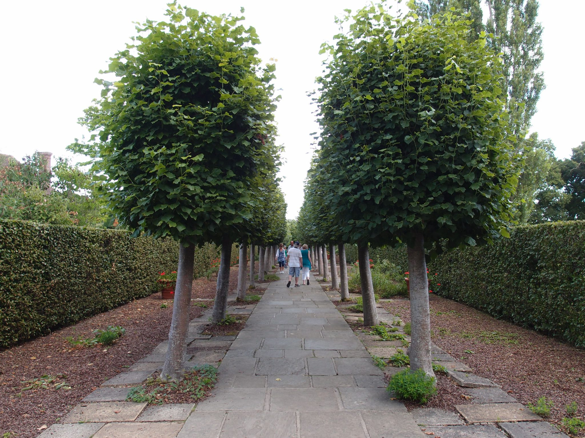 After the Cottage Garden, we entered the Lime Walk, in the Spring Garden. Since the 1930s, when Harold Nicolson designed the Lime Walk, the trees have been replaced two times.
