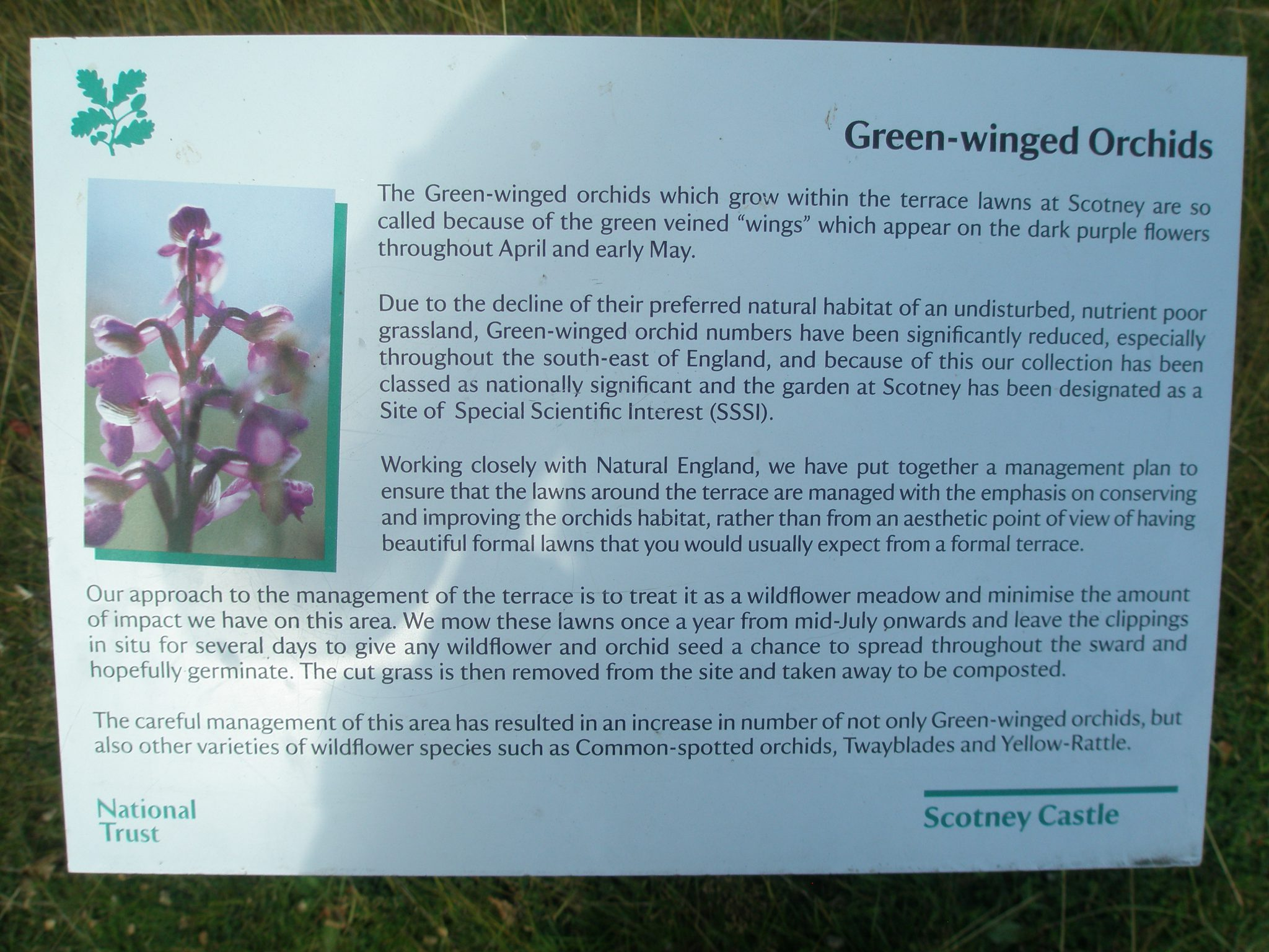Sign in the Orchid Field