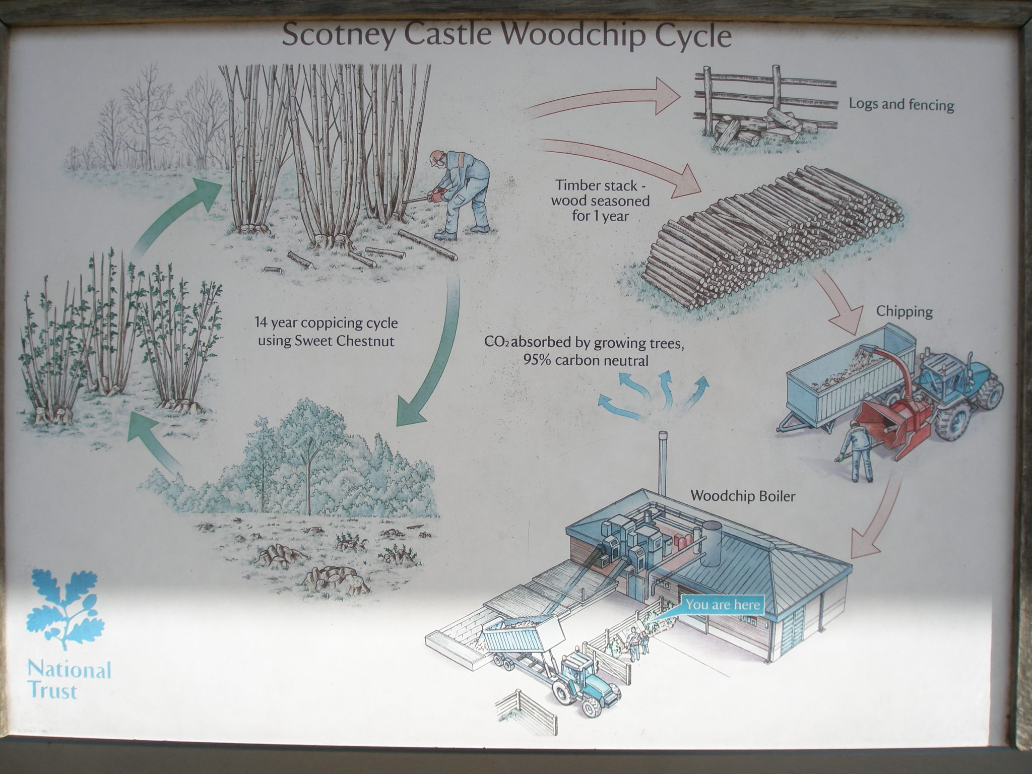 The Castle's woodlands are being managed for sustainable fuel to feed the Scotney biomass boiler.