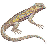 LizardWatercolor
