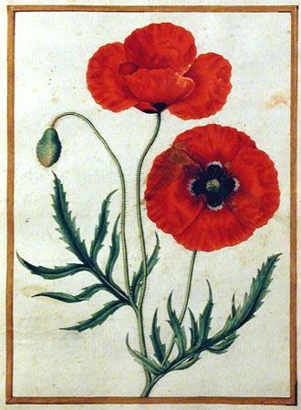 RedPoppyWatercolor