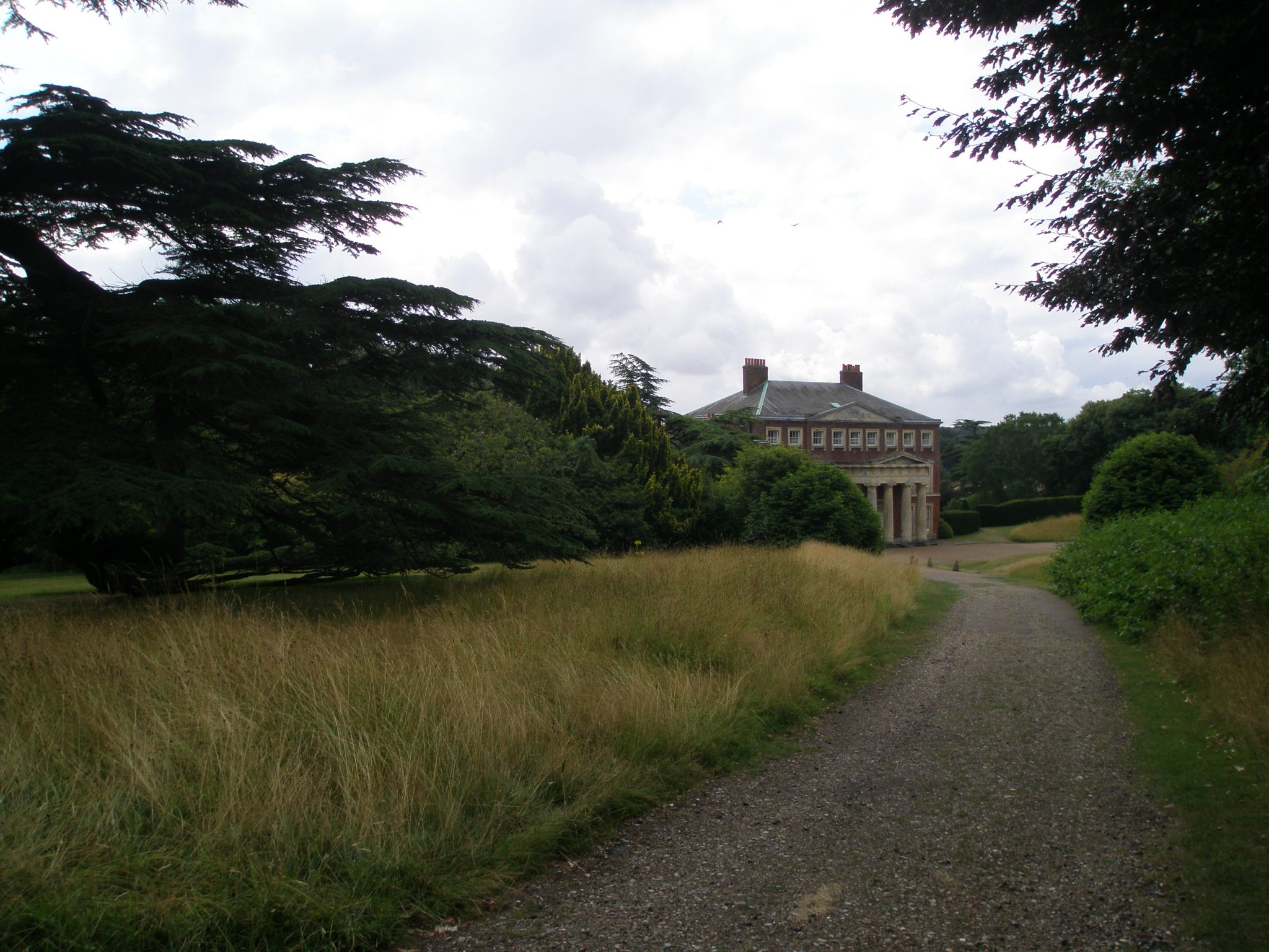 We left the Gravel Garden, and wandered down part of the half-mile-long approach drive, which runs north-west of the House. The most majestic tree along this drive is an ancient Cedar of Lebanon.