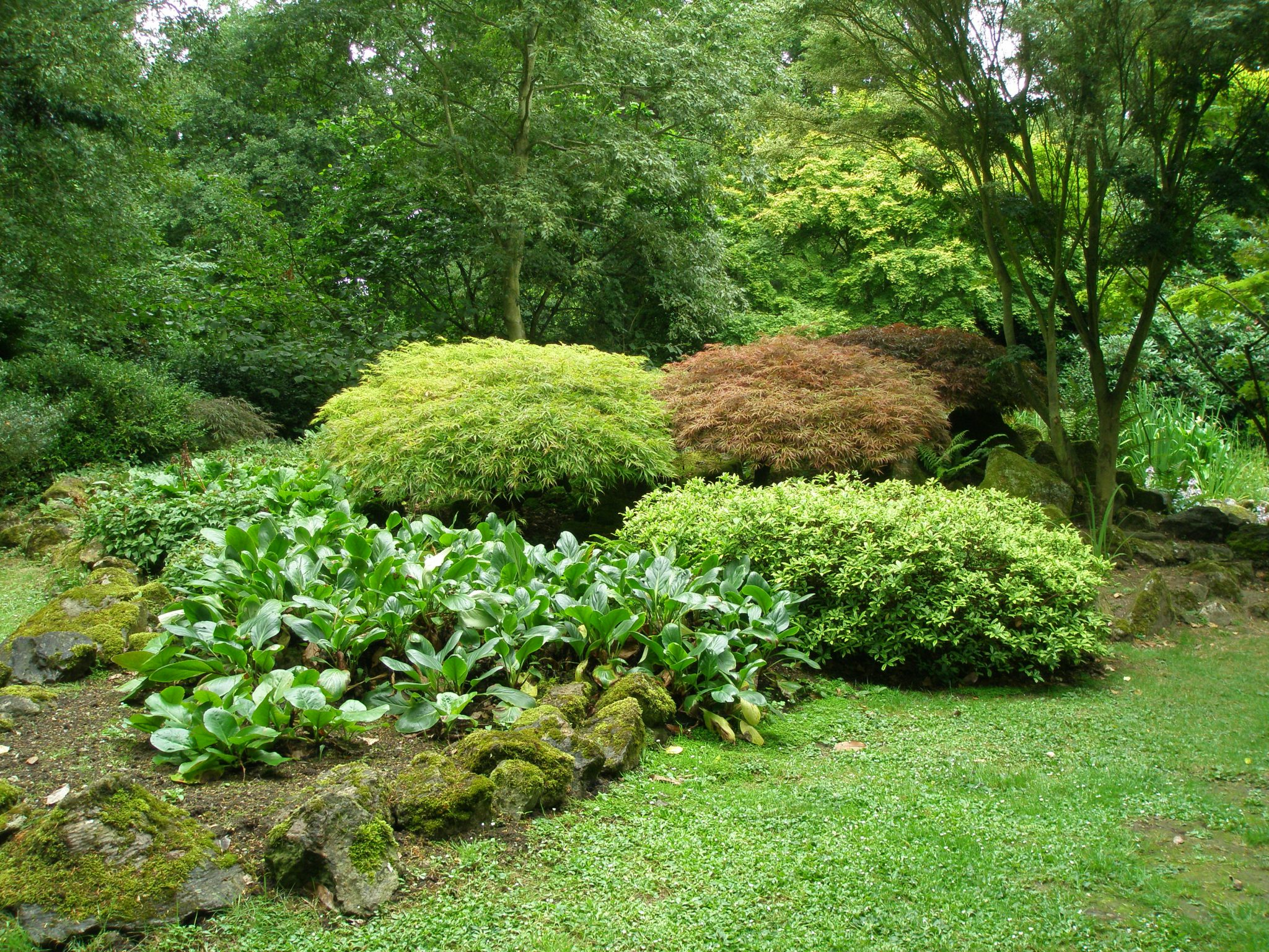 This small Pond Garden is nestled into a far corner of the Woodland Garden.