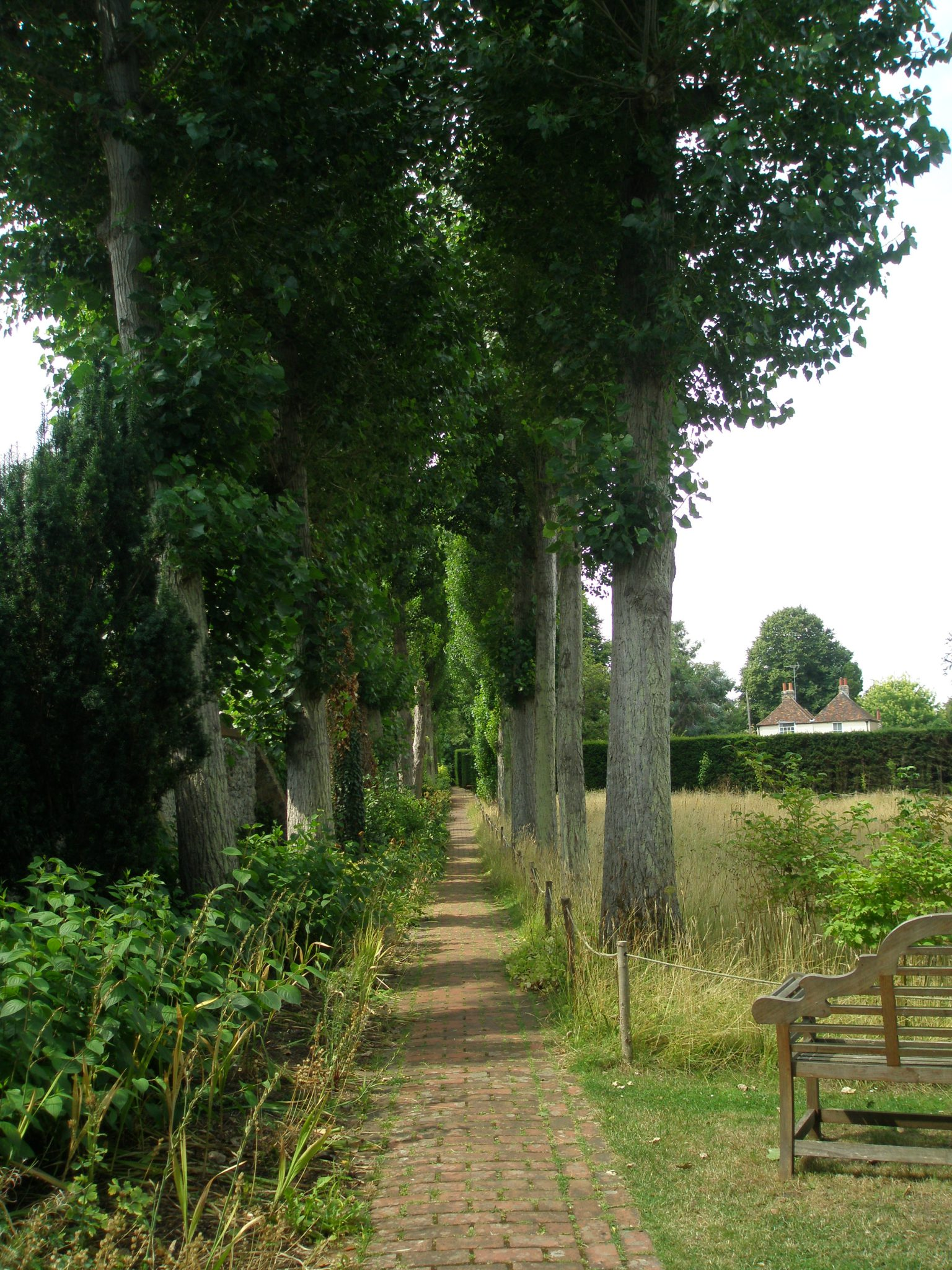 And now a TALL view of the Poplar Walk