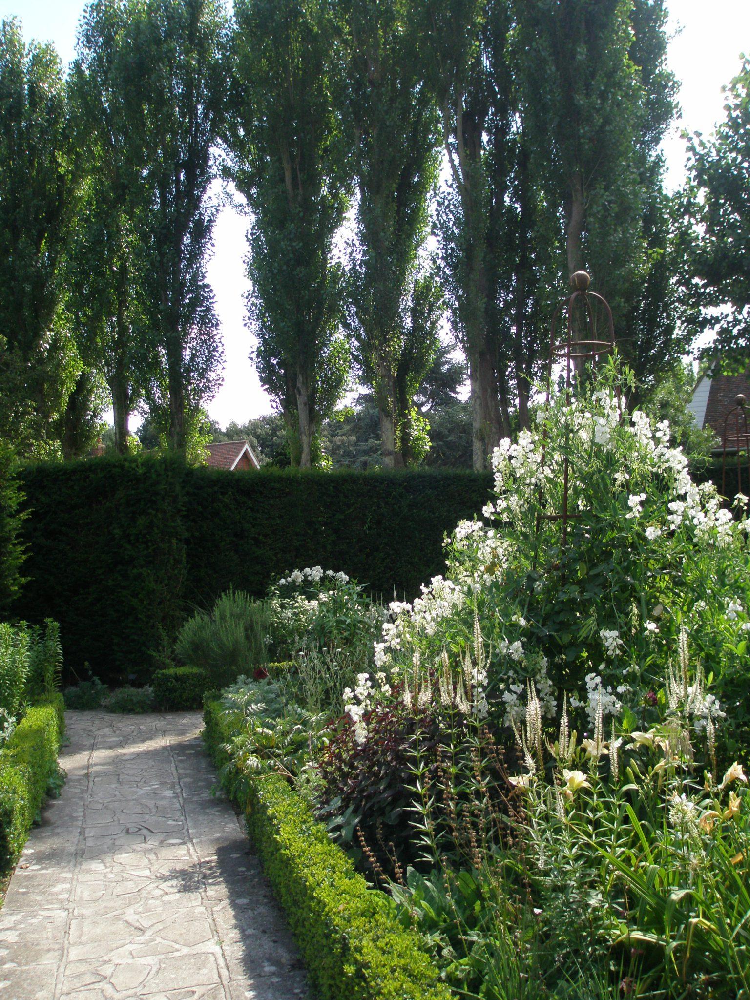 Looking toward the Poplar Walk, from the White Garden