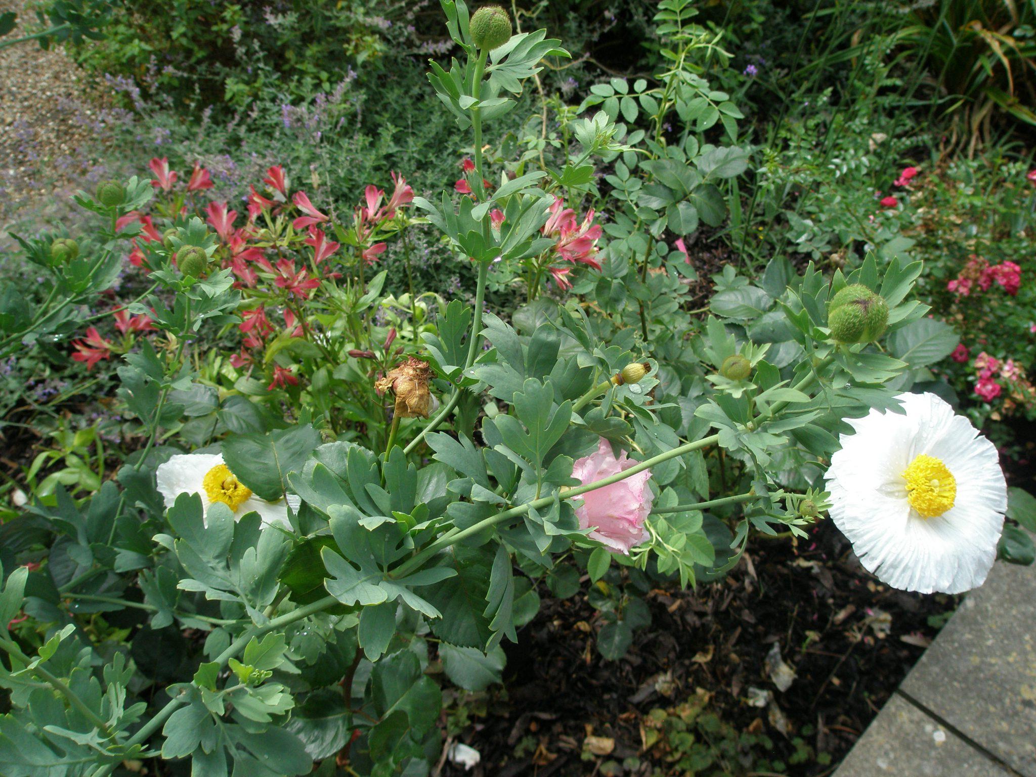 Flowers in the Queen Mum's Garden.