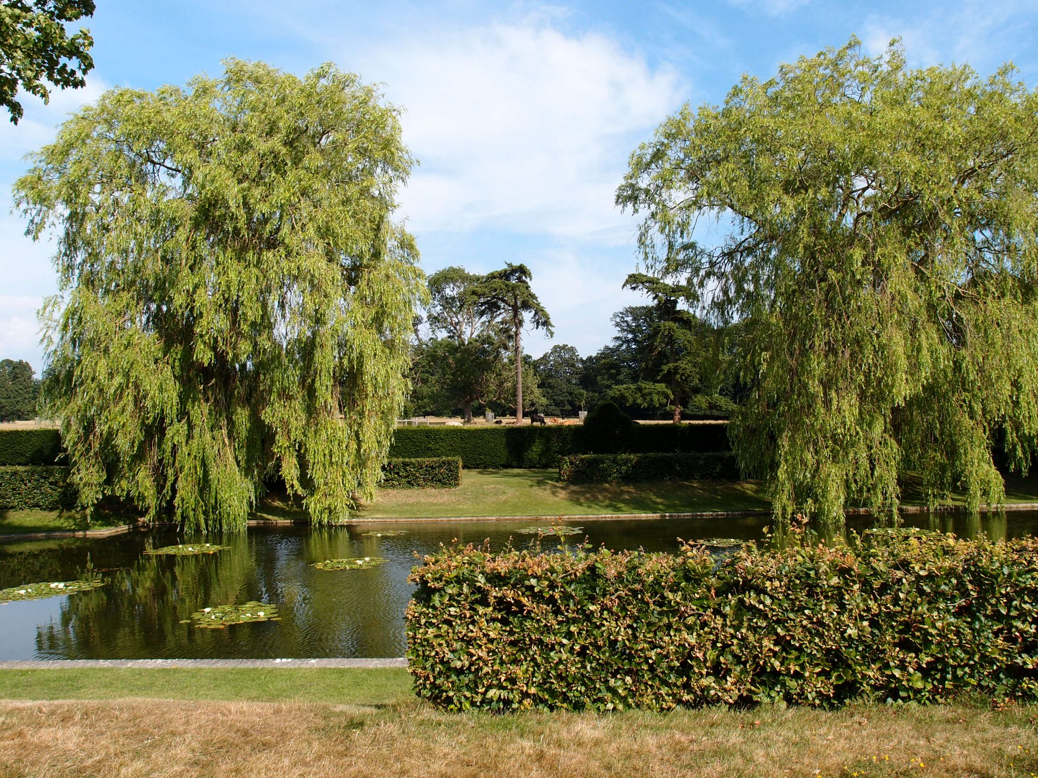 Massive weeping willow trees are planted along the east side of the Lily Pond