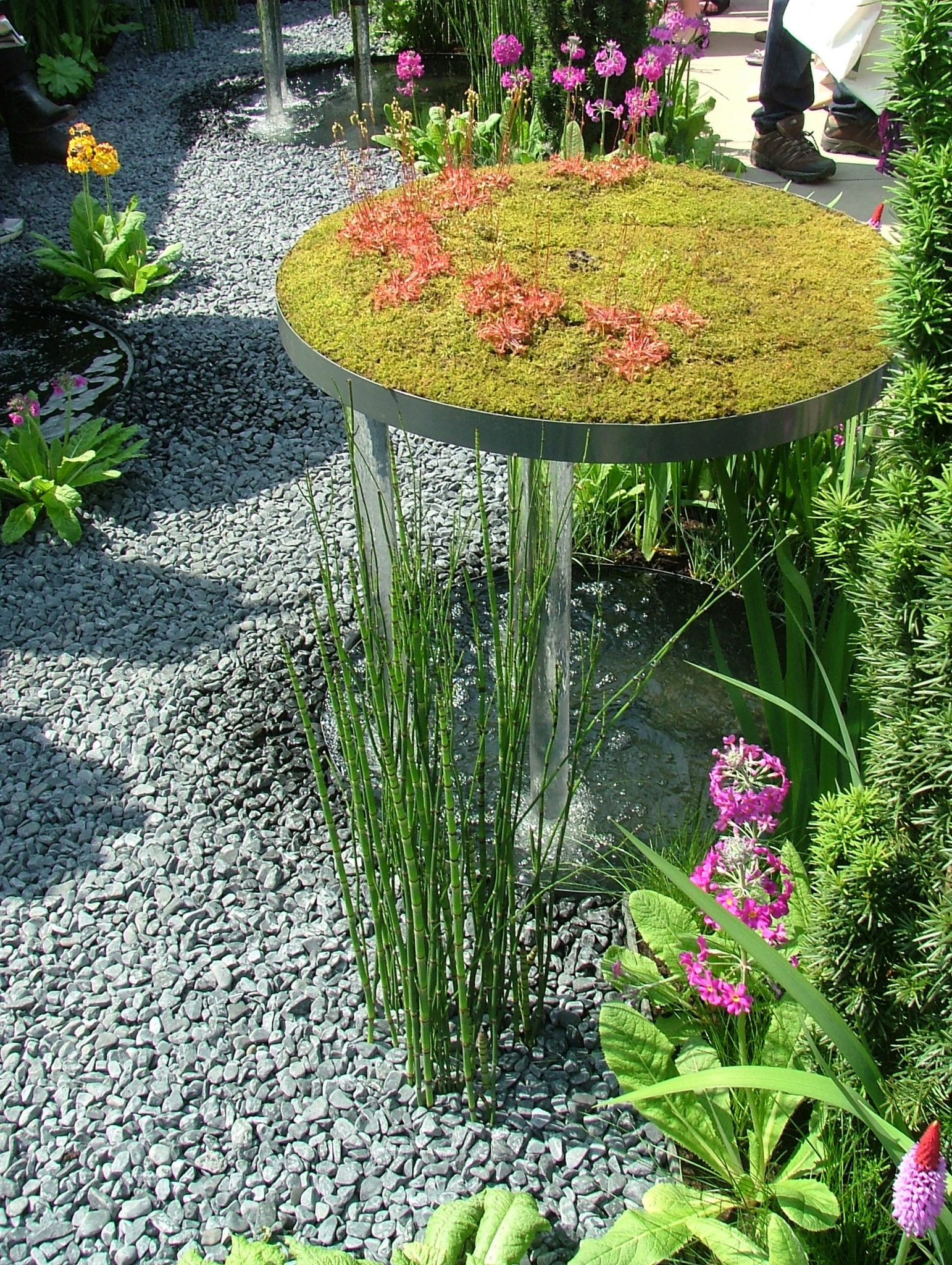 At the Chelsea Flower Show in May 2012. Photo by Anne Guy.