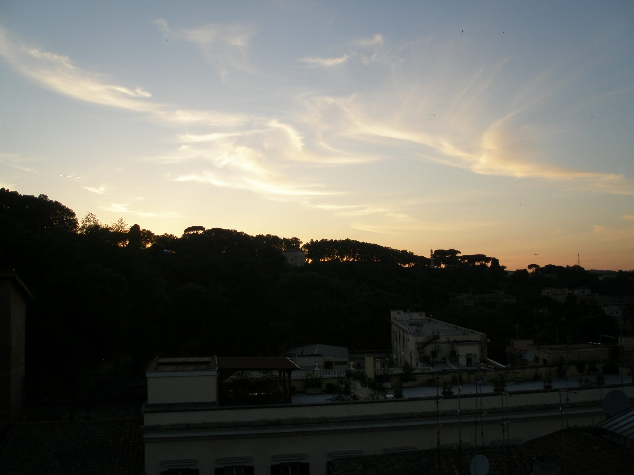 Roman Pines, silhouetted, as the sun sets behind the Gianicolo.