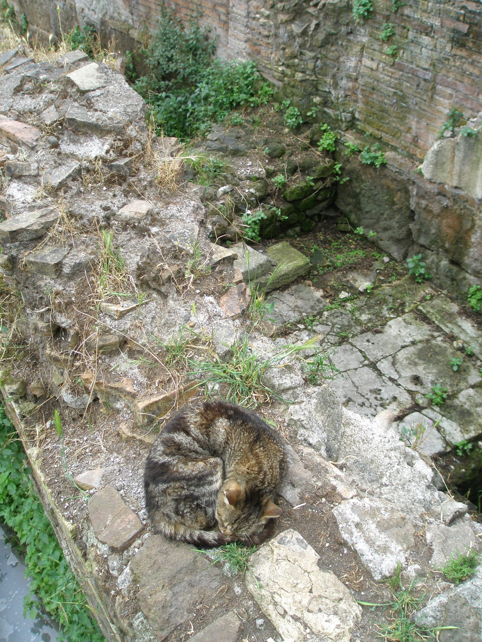 Oblivious to passers-by, one of the approximately 250 kitties in the Area Sacra snoozes on ancient stones. Most of Temple D is under an adjacent street, and remains unexcavated.