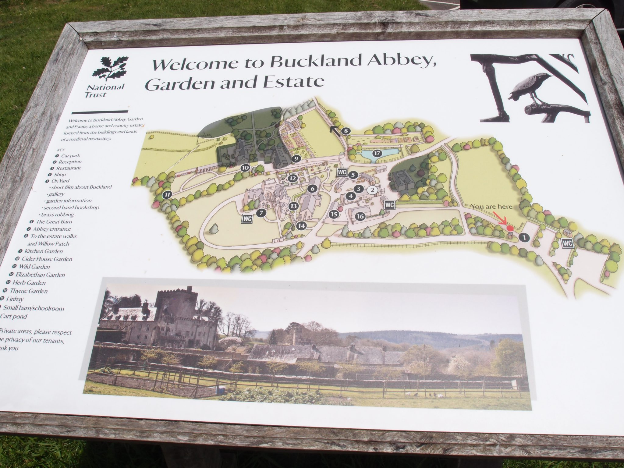 Back at the Car Park, I decided that, at some point in the future, I must return to Buckland Abbey: there are still Estate Walks to explore. (Note: the shaded gray area on the Visitors' Map indicates the Bed & Breakfast area of the Cider House Garden.)