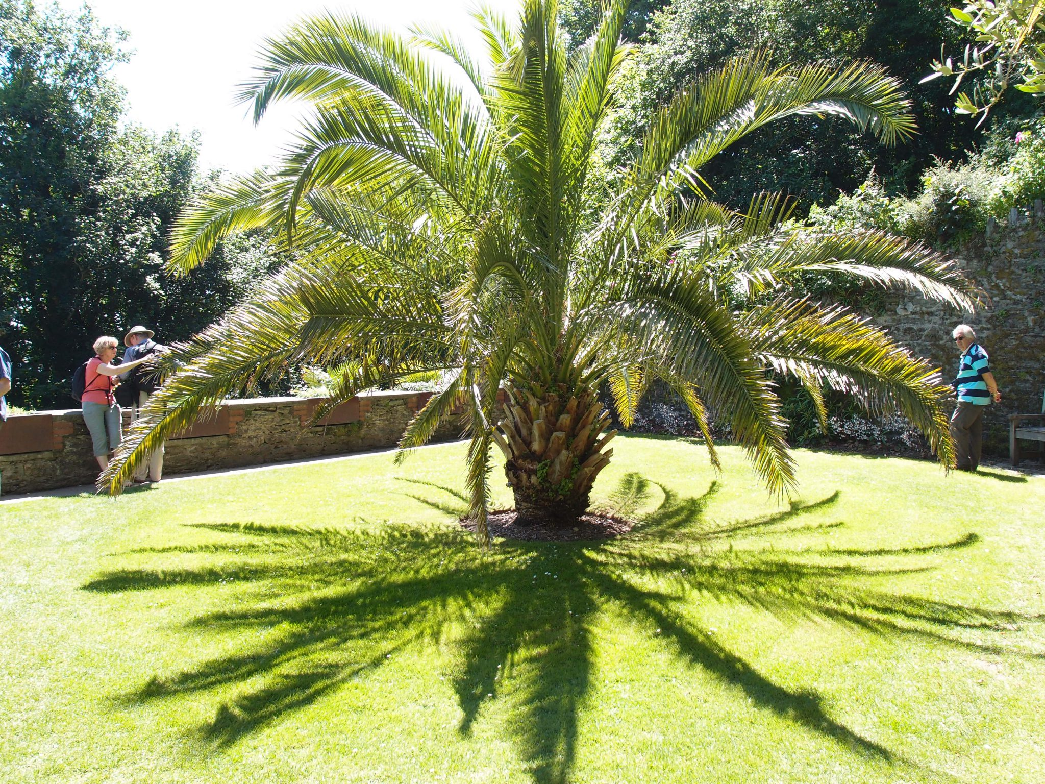 A magnificent Date Palm is planted at the center of the Secret Garden.