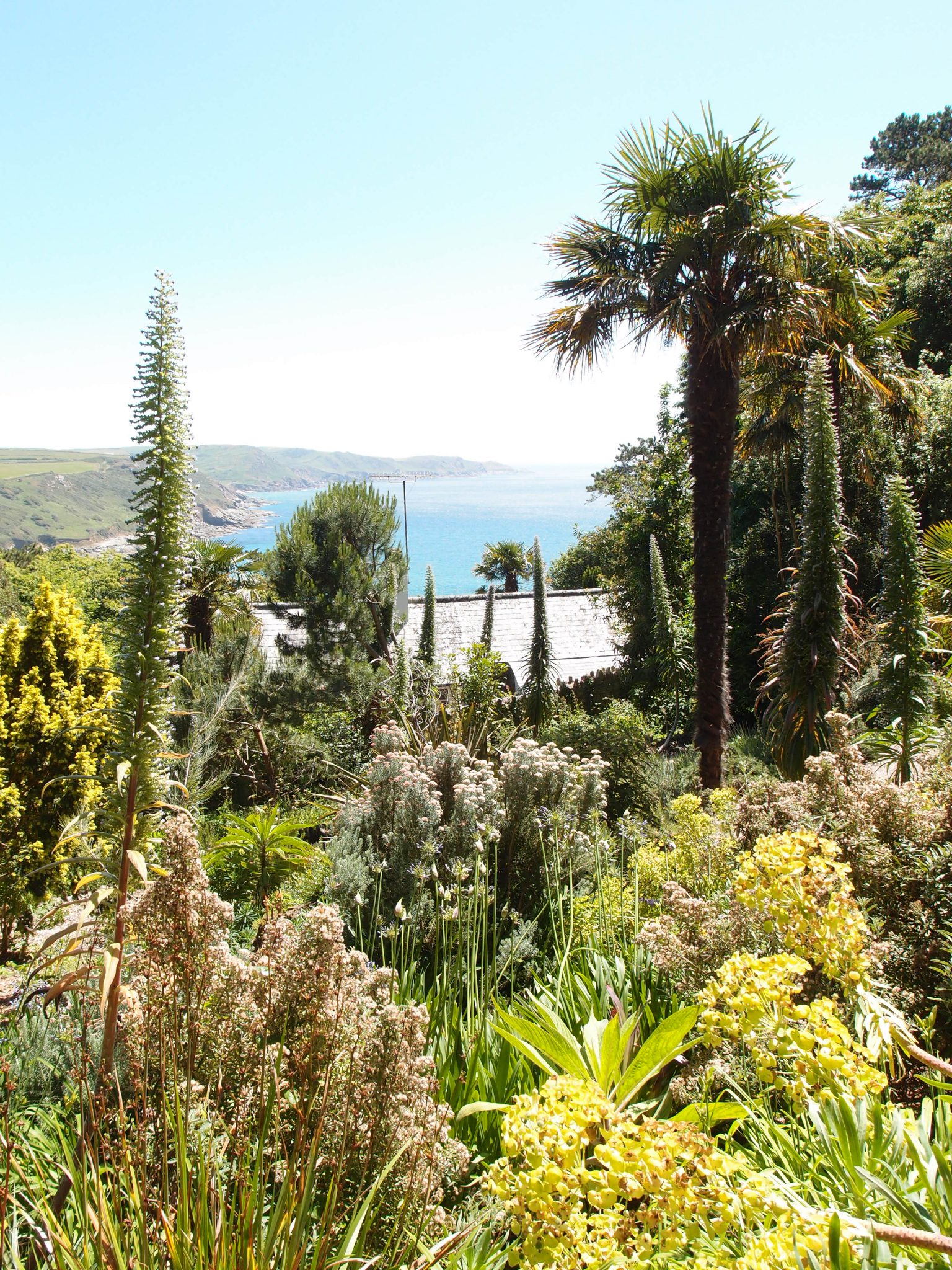 View of Salcombe Bay, from the Palm Gardens.