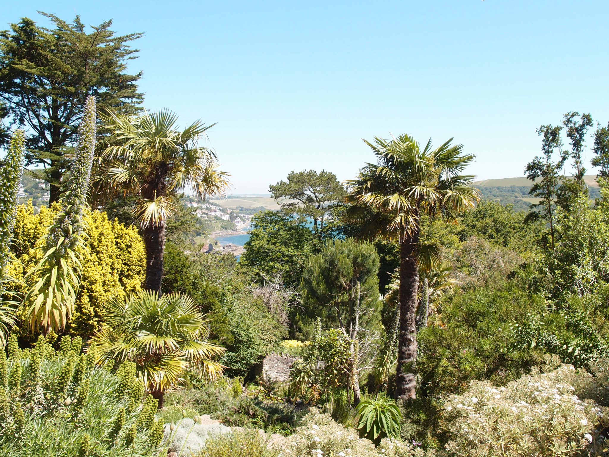 The Palm Gardens sprawl across steep, travelled banks and terraces. All of the Chusan Palms date from the 1930s, during Otto Overbeck's residency.
