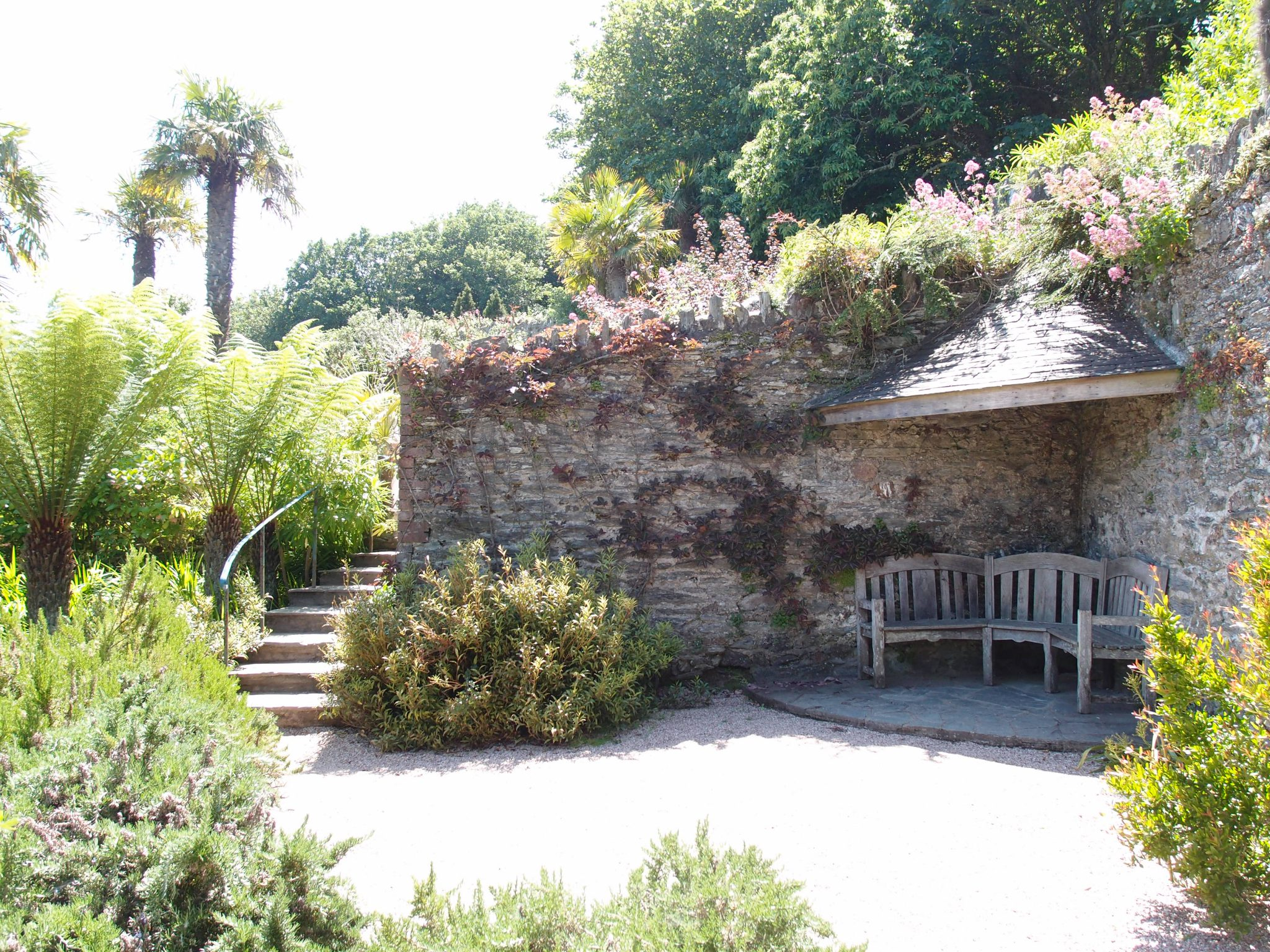 The Gazebo Garden has a small, sheltered seating area. This hidden pocket of Overbeck's is planted with cistus, and myrtle trees with cinnamon bark.