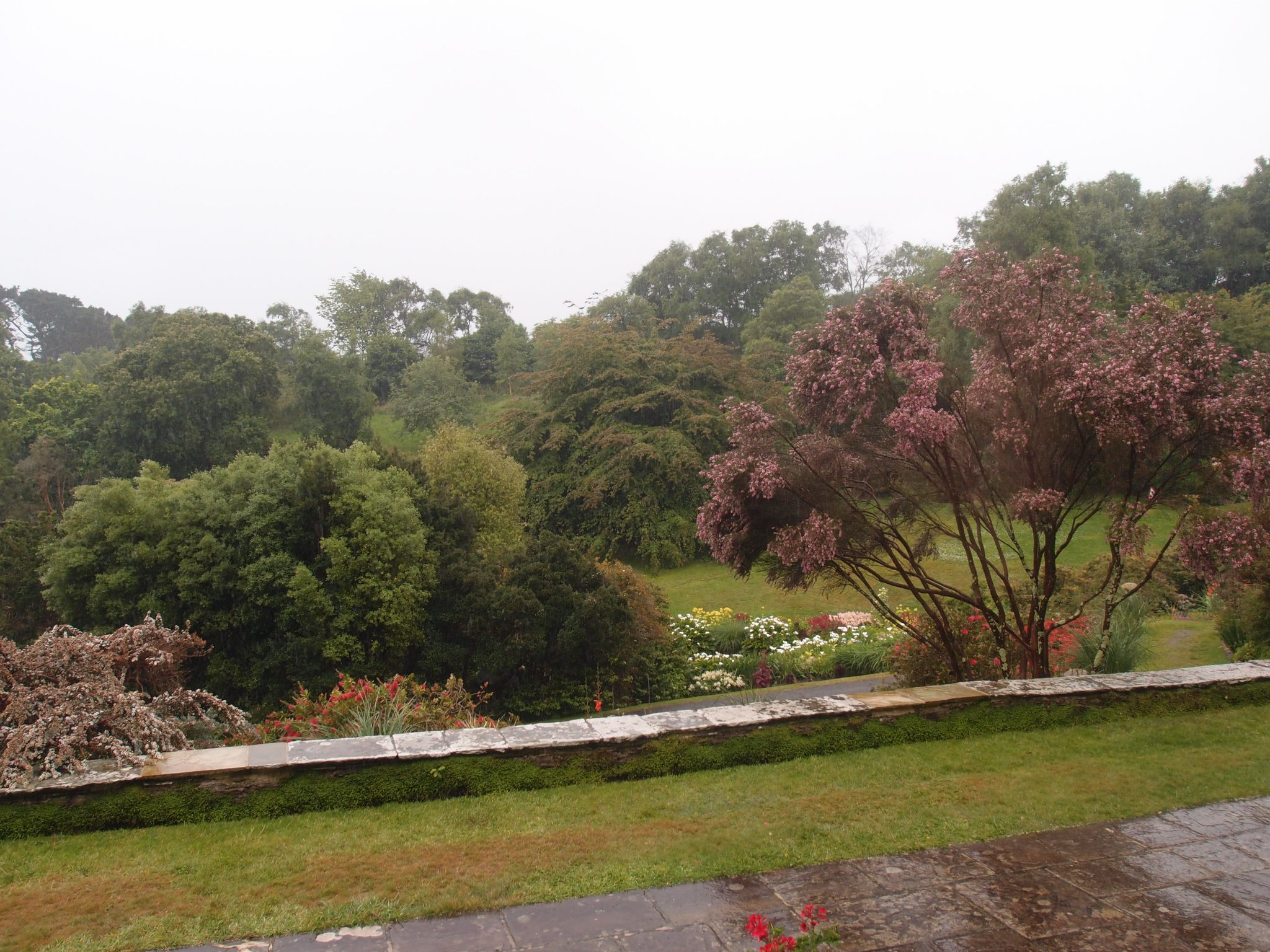 Miraculously, the fog had begun to lift. Here's our Dining Room view of the Terraces, over the Lower Pond Garden, and across to the West Bank.
