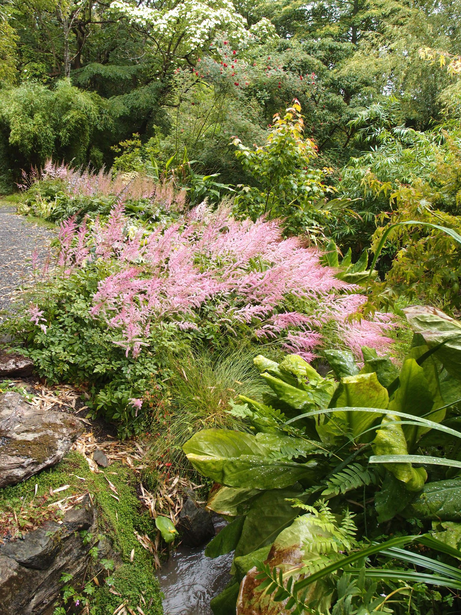 Plantings in the Glade combine traditional English shrubs with tropical exotics