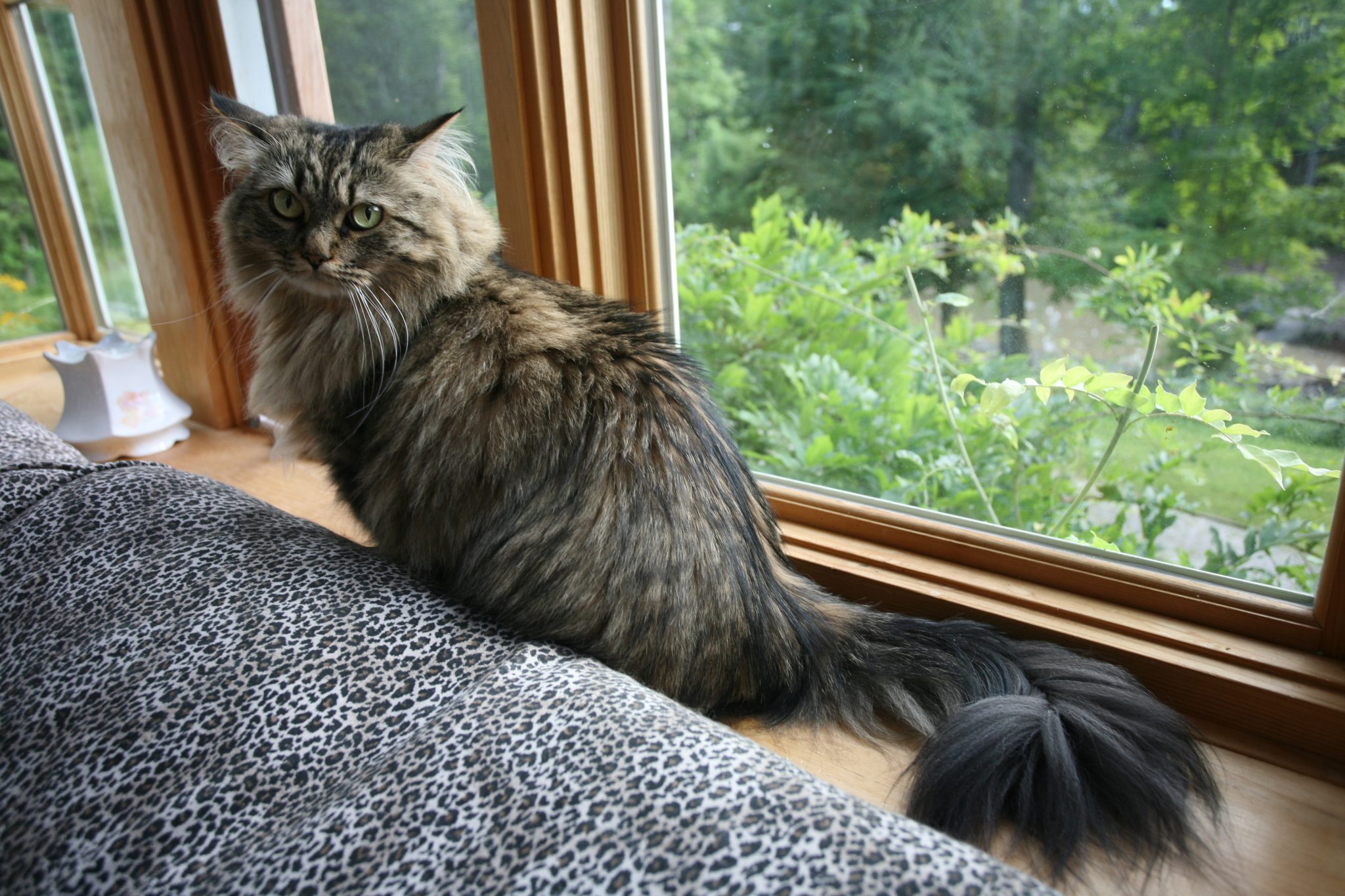 Ginger-the-Cat (named after Ms.Rogers) stakes her claim to the window-seat.