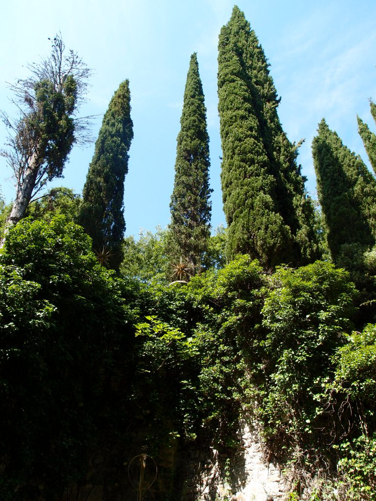 A sense of near-claustrophobia, as Italian Cypresses tower over the walls of the Lily Pond's Courtyard.